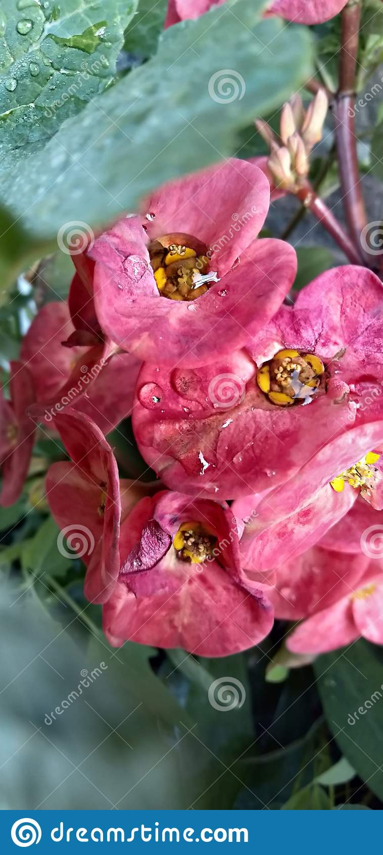 Piękni kwiaty z Krystalicznymi kroplami woda