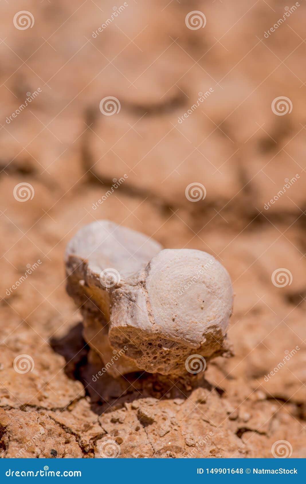 Piękni wzory tworzący w błocie, skale z skamieniałą widoczną opłatą wysuszonych/teraz erozja - badlands park narodowy