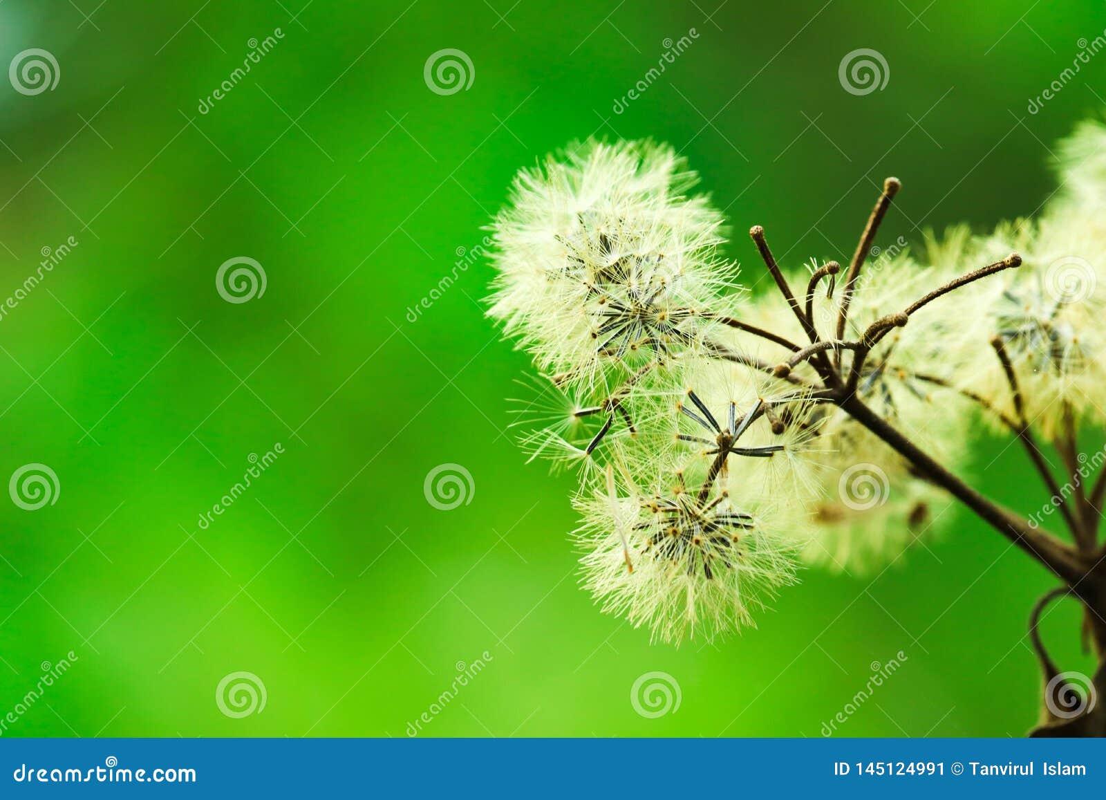 Pięknie kwitnący biali kwiaty - wizerunek