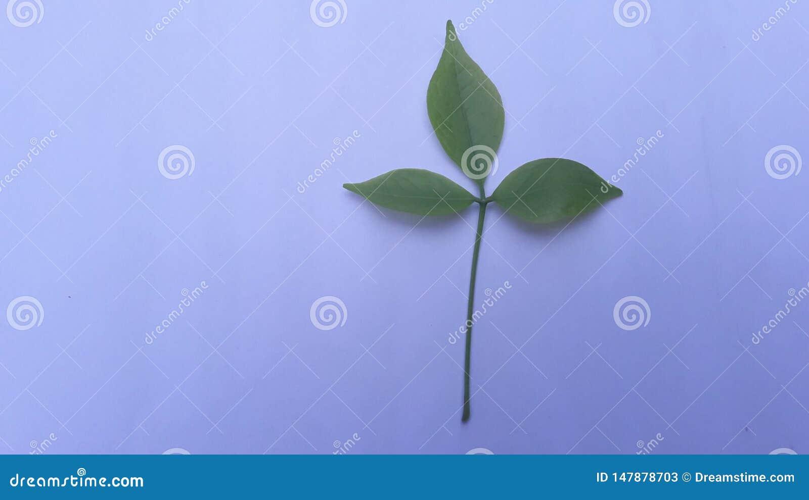 Piękno dziecko liście