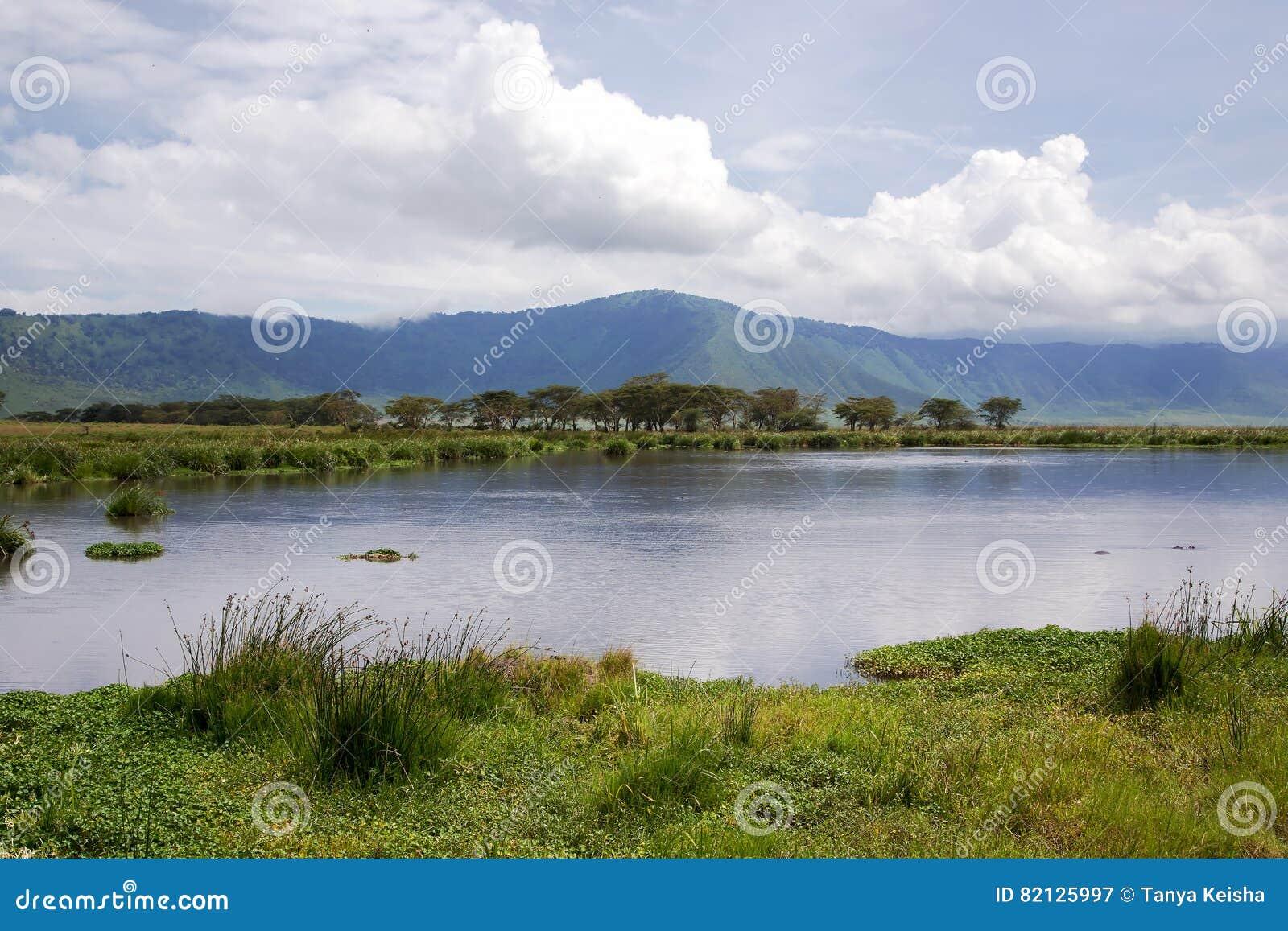 Piękno natura blisko Jeziornego Manyara z hipopotamami