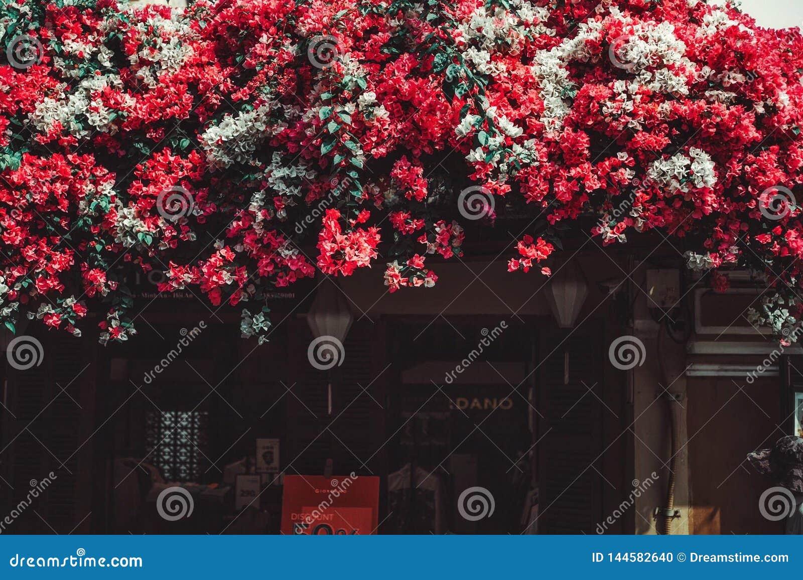 Piękno Papierowy kwiat w Vietnam