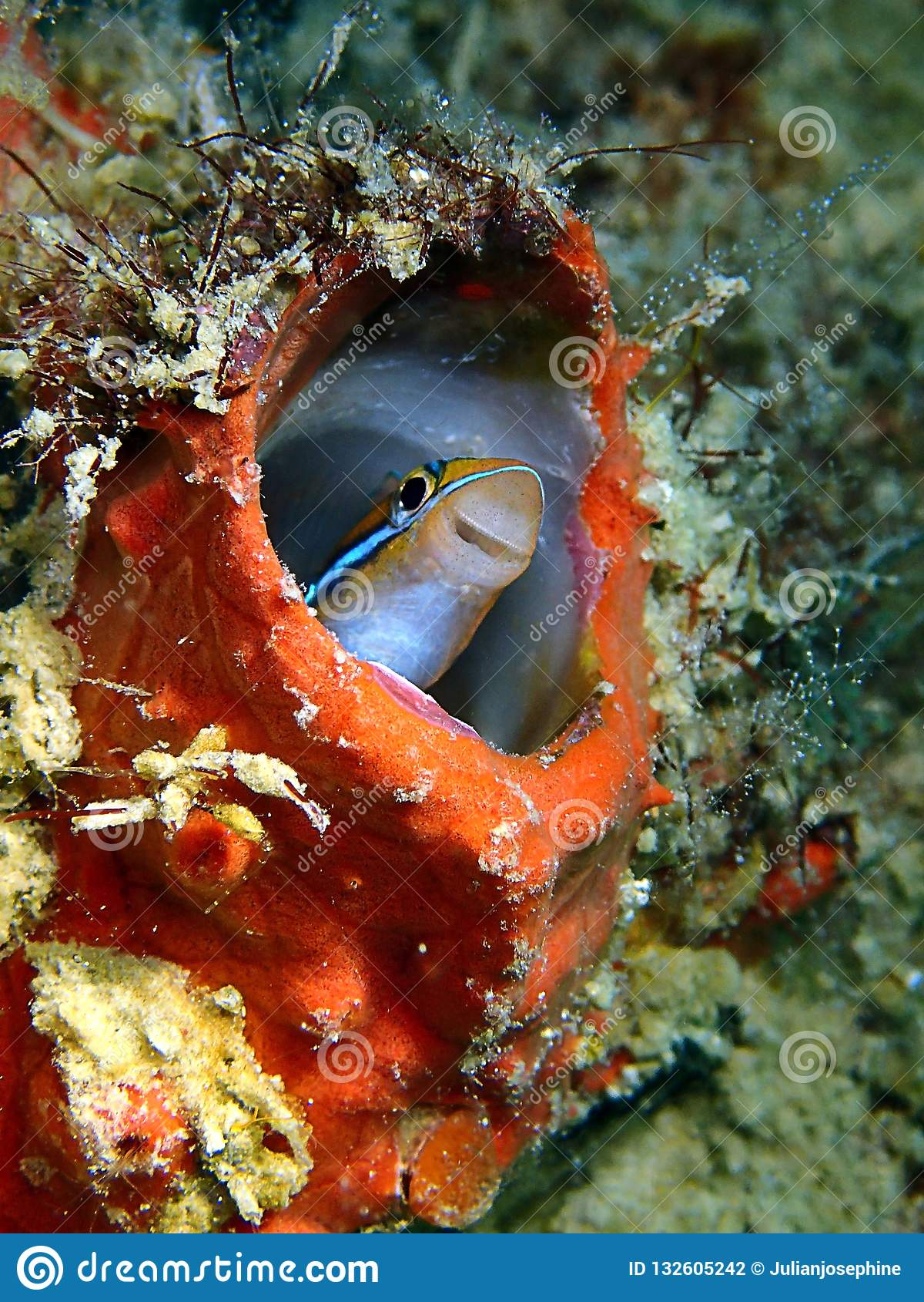 Piękno podwodny świat w Sabah, Borneo
