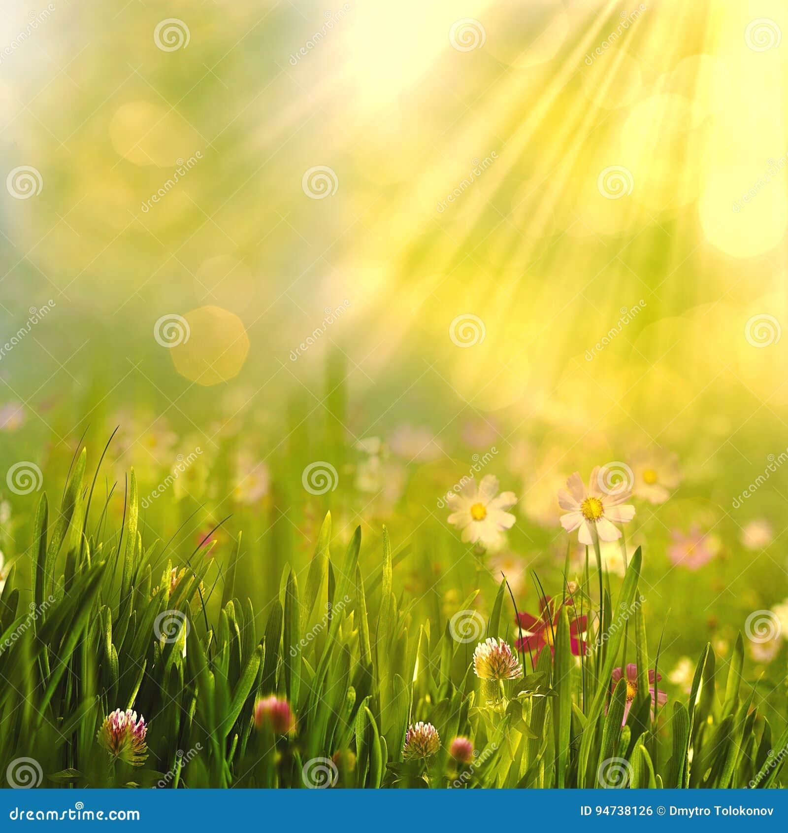 Piękno wiosna i lato krajobraz z świeżą stokrotką kwitniemy