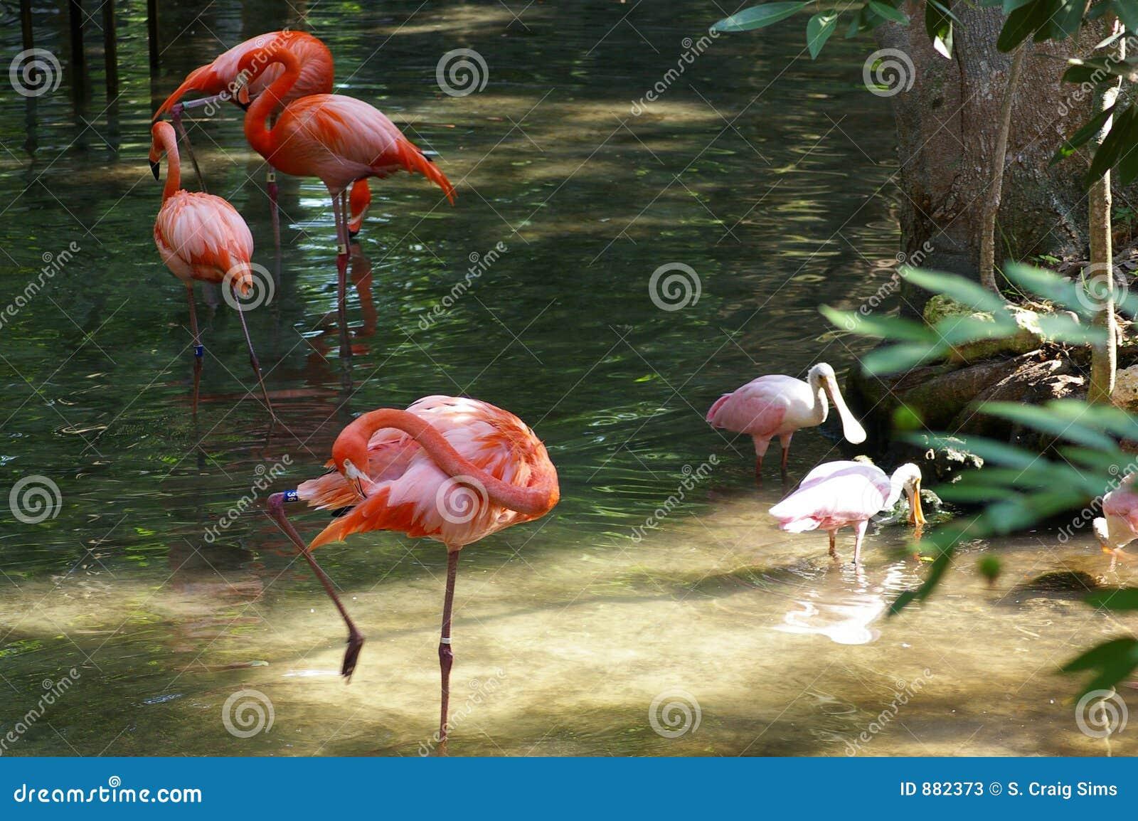 Piękno wody tropikalne