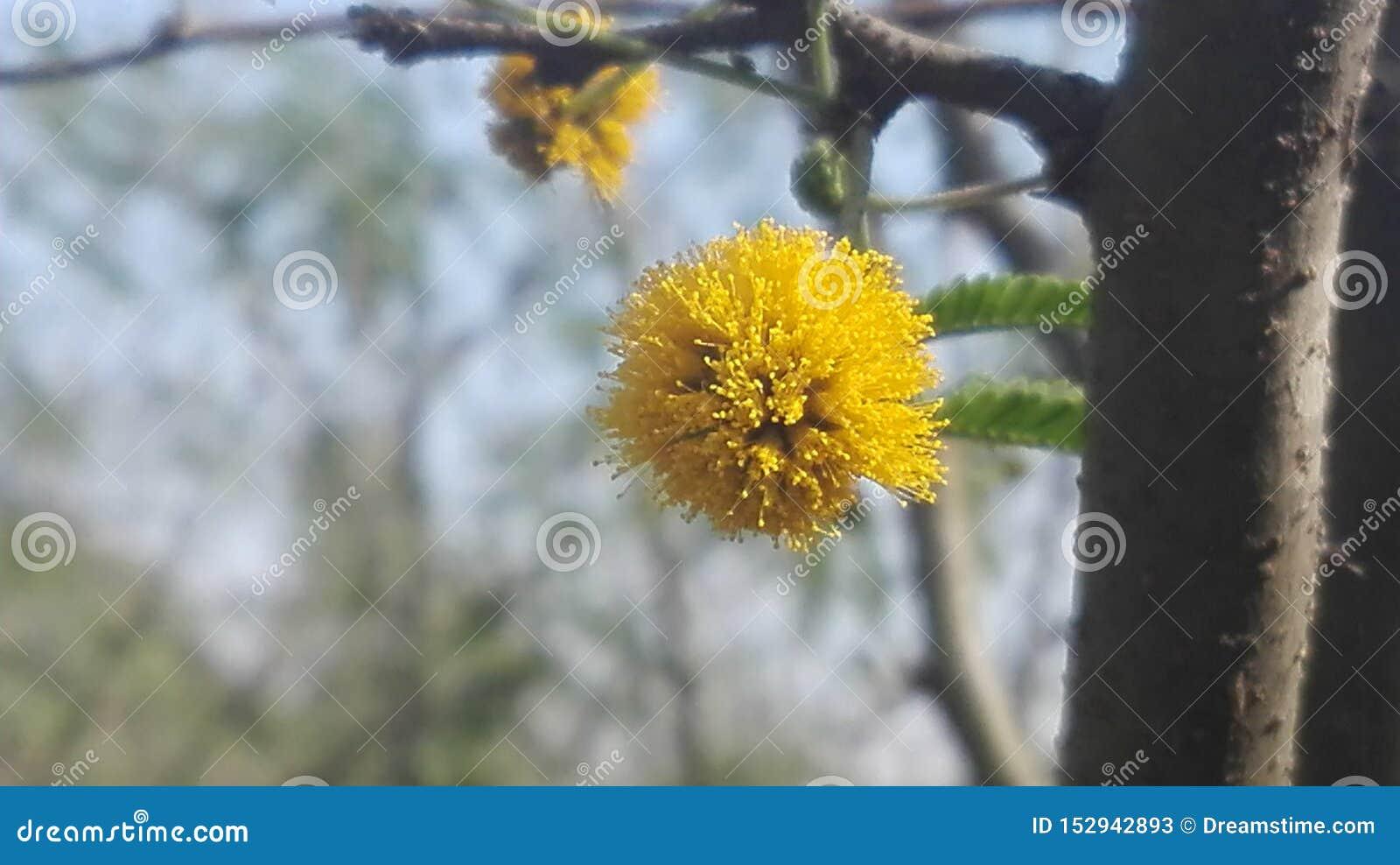 Piękny żółty kwiat gdzieś za drewnach w