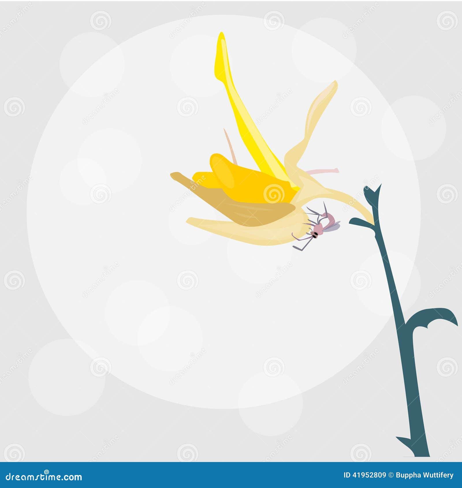Piękny żółty kwiatu wektor