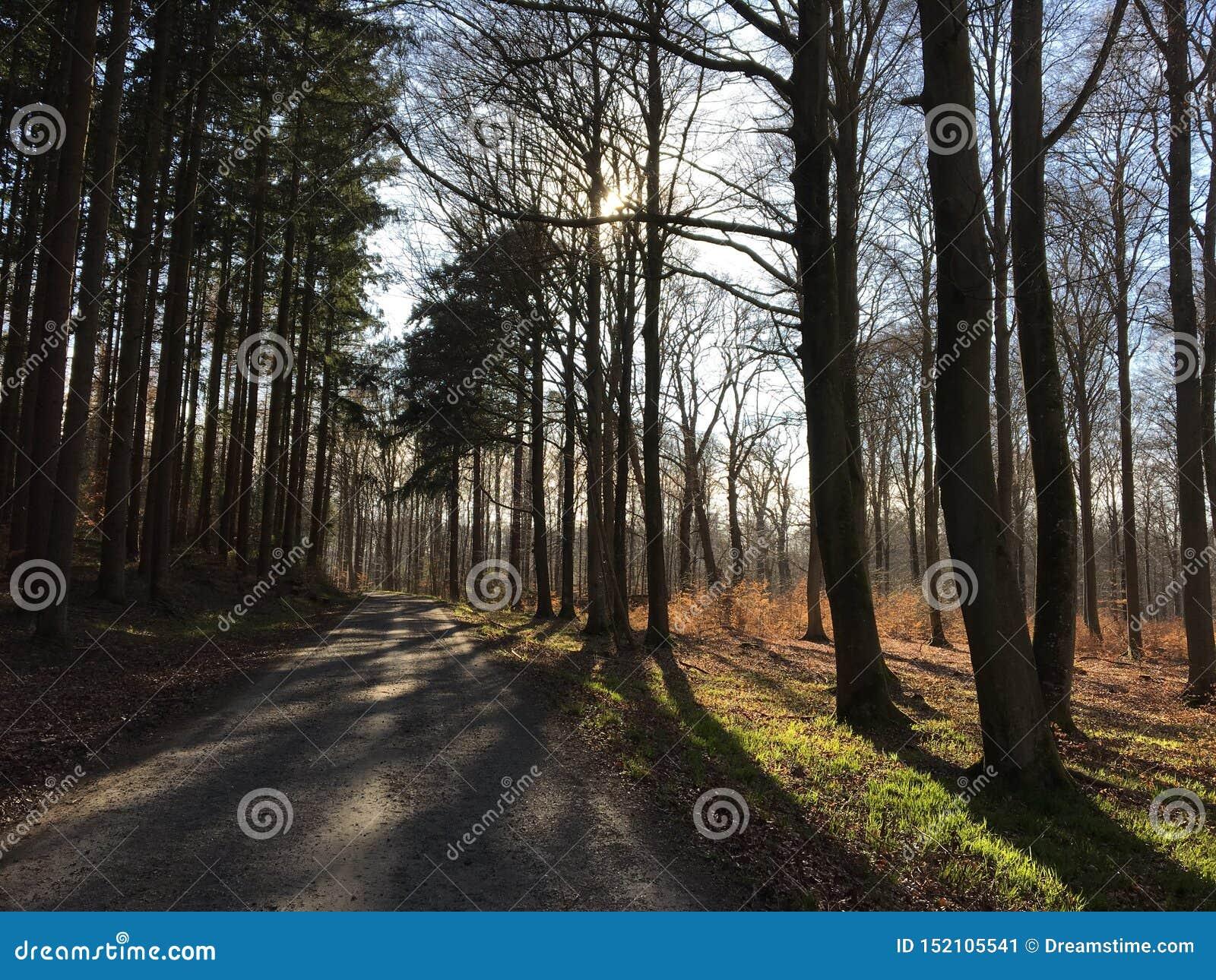 Piękny błękitny las, światło słoneczne i drzewa w Francja,