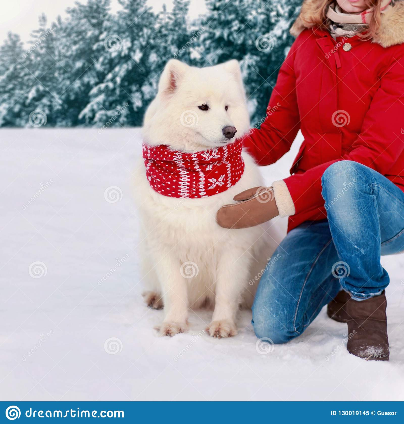 Piękny biały Samoyed pies w zimnej zimie ubierał czerwonego szalika
