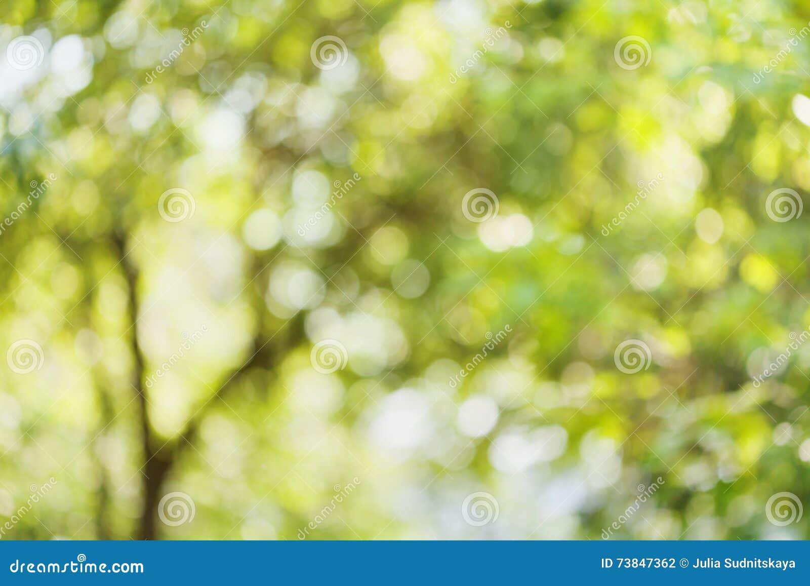 Piękny bokeh tło defocused drzewo Naturalny zamazany tło zieleni liście Lata lub wiosny sezon