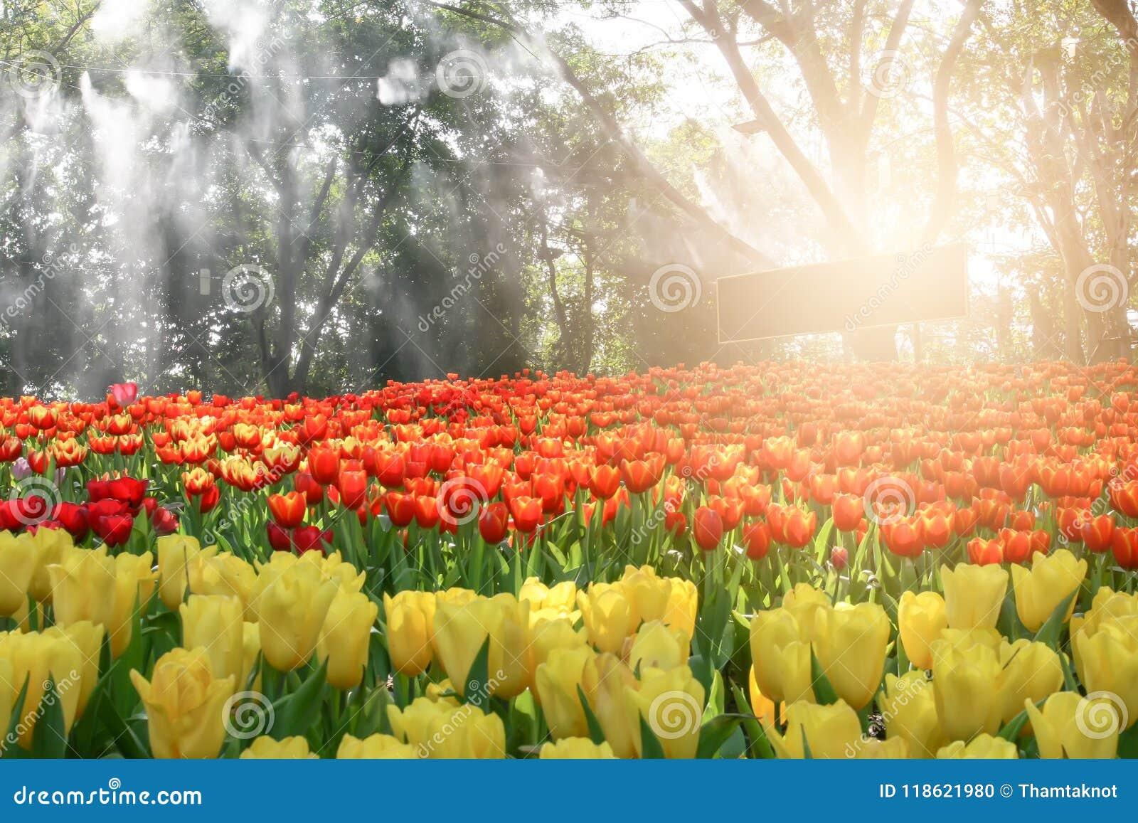Piękny bukiet tulipany w kwiatu ogródzie, doceniać naturę