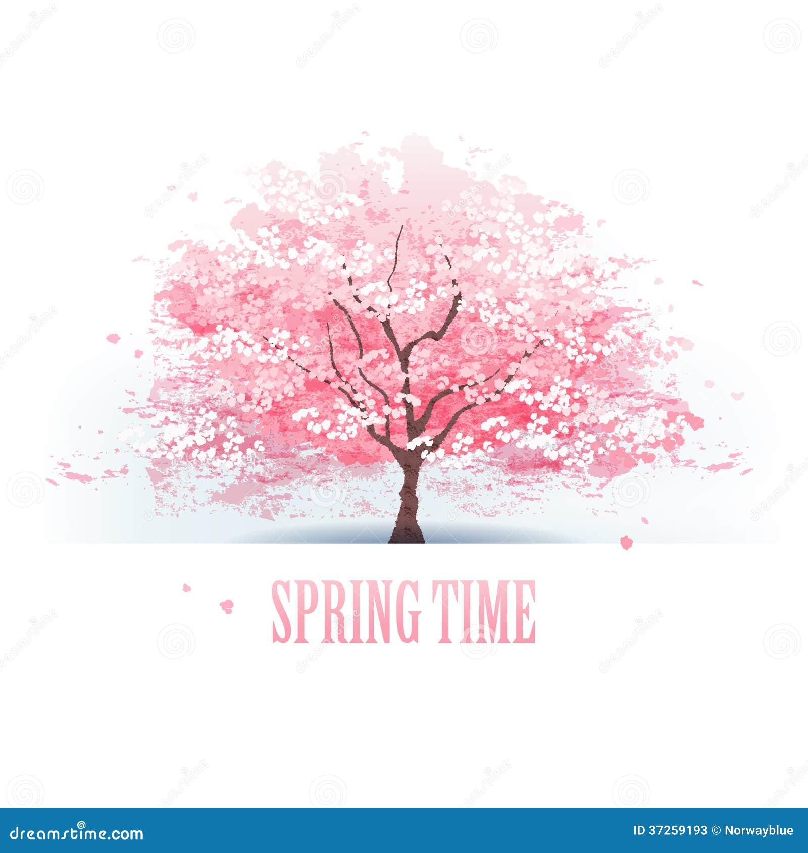 Piękny czereśniowego okwitnięcia drzewo