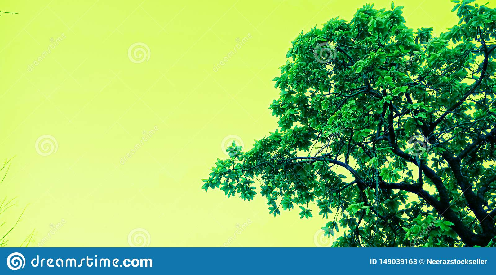 Piękny drzewo z niebo wizerunku zapasu fotografią