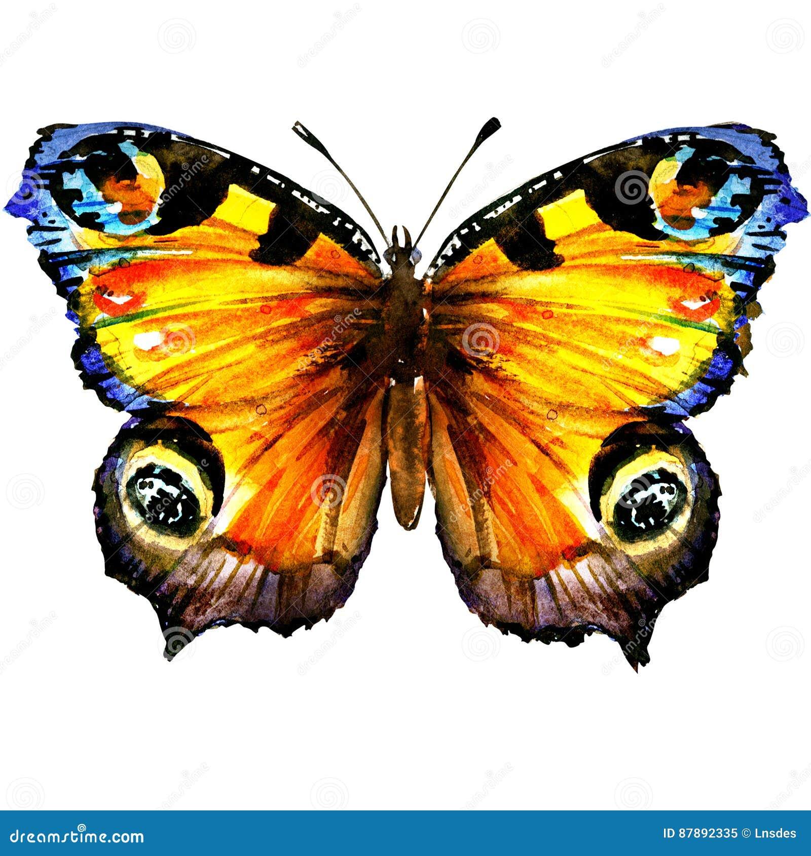 Piękny Europejski Pawi motyl z otwartymi skrzydłami, odgórny widok, odizolowywający, akwareli ilustracja na bielu