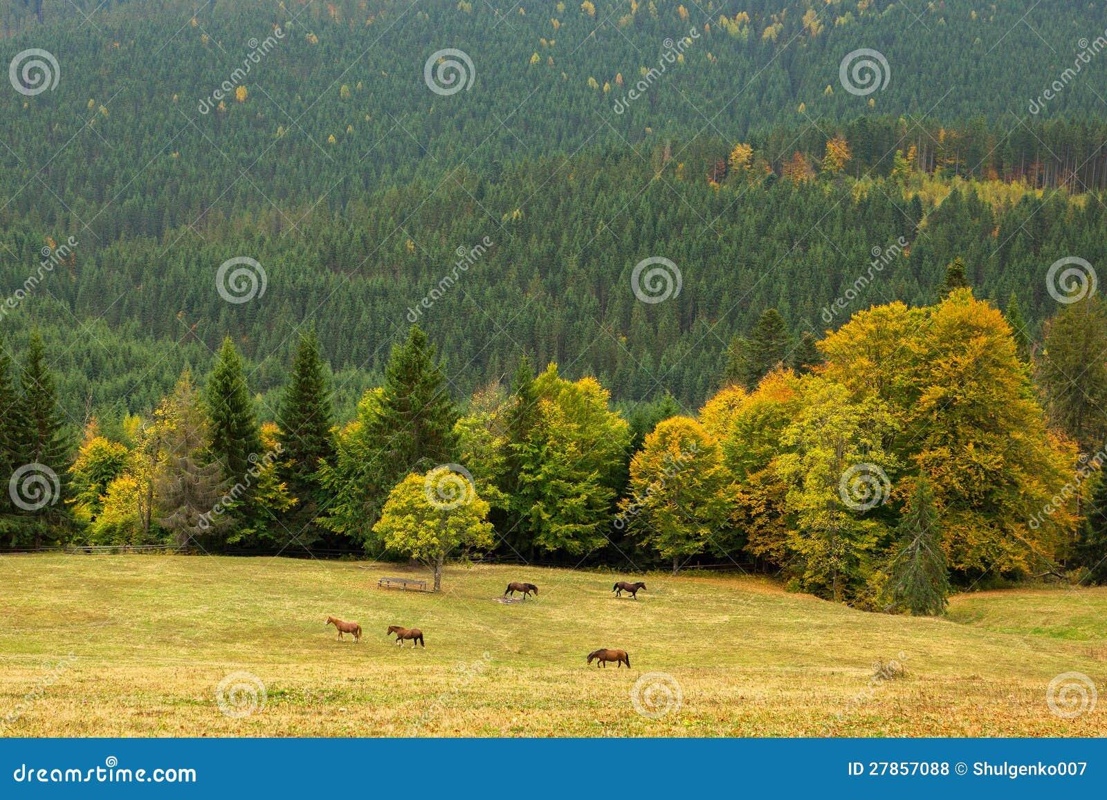 Piękny góra krajobraz z dzikim horsesð¸