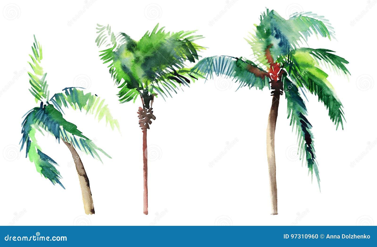 Piękny jaskrawy śliczny zielony tropikalny uroczy cudowny Hawaii lata trzy drzewek palmowych akwareli ręki kwiecisty ziołowy nakr