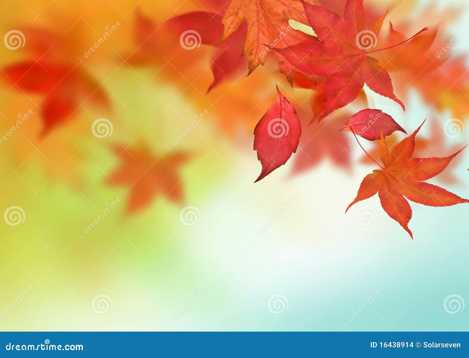 Piękny jesień tło