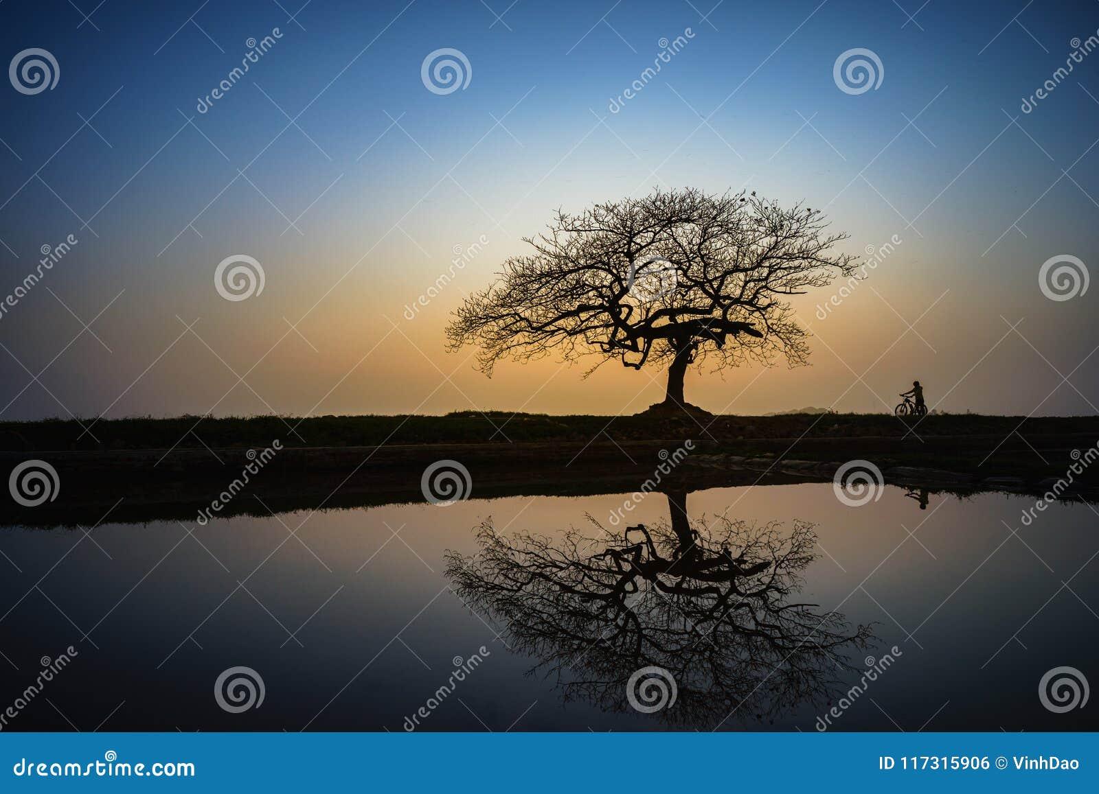 Piękny krajobraz z drzewną sylwetką i odbicie przy zmierzchem z samotną dziewczyną i rowerem pod drzewem