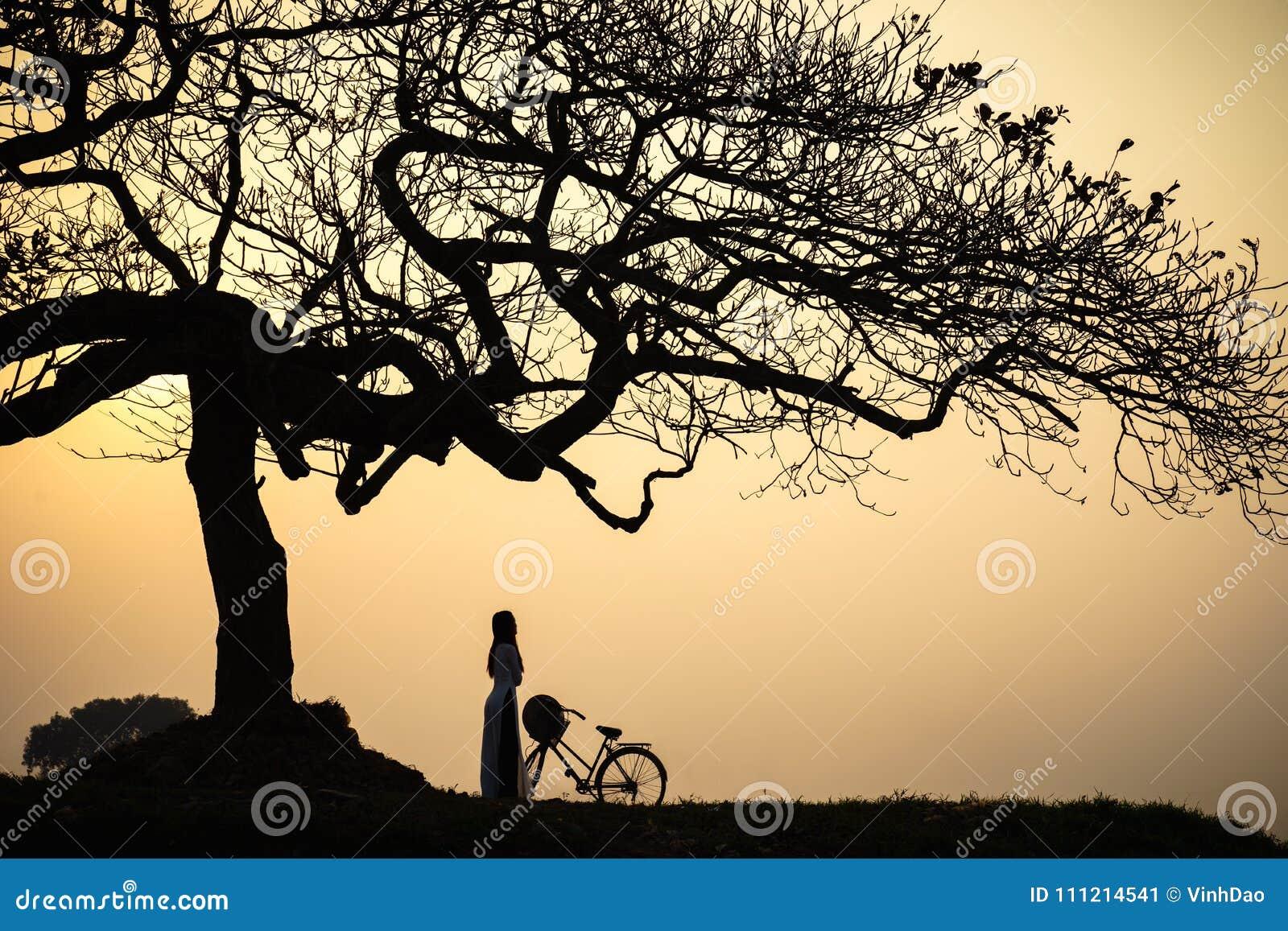 Piękny krajobraz z drzewo sylwetką przy zmierzchem z Wietnamską kobietą jest ubranym tradycyjną sukni Ao Dai pozycję pod drzewem