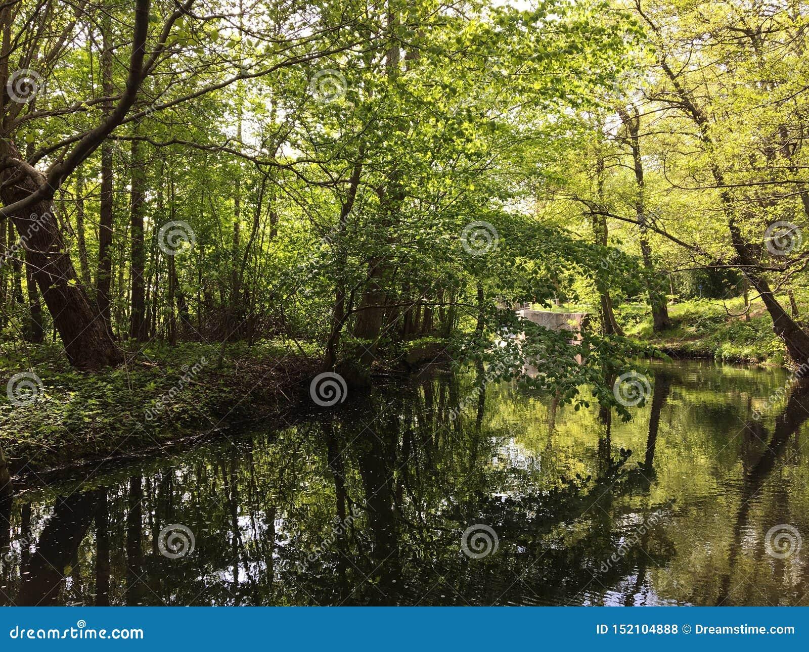 Piękny las z światłem słonecznym w Dani blisko Kopenhaga