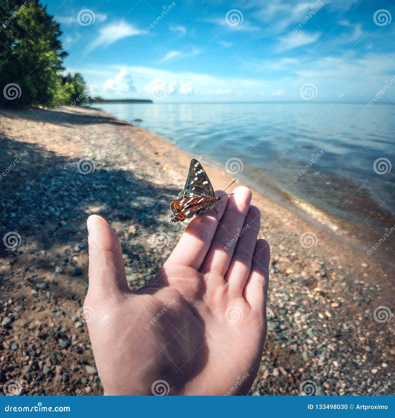 Piękny motyli obsiadanie na mężczyzna ręce w górę