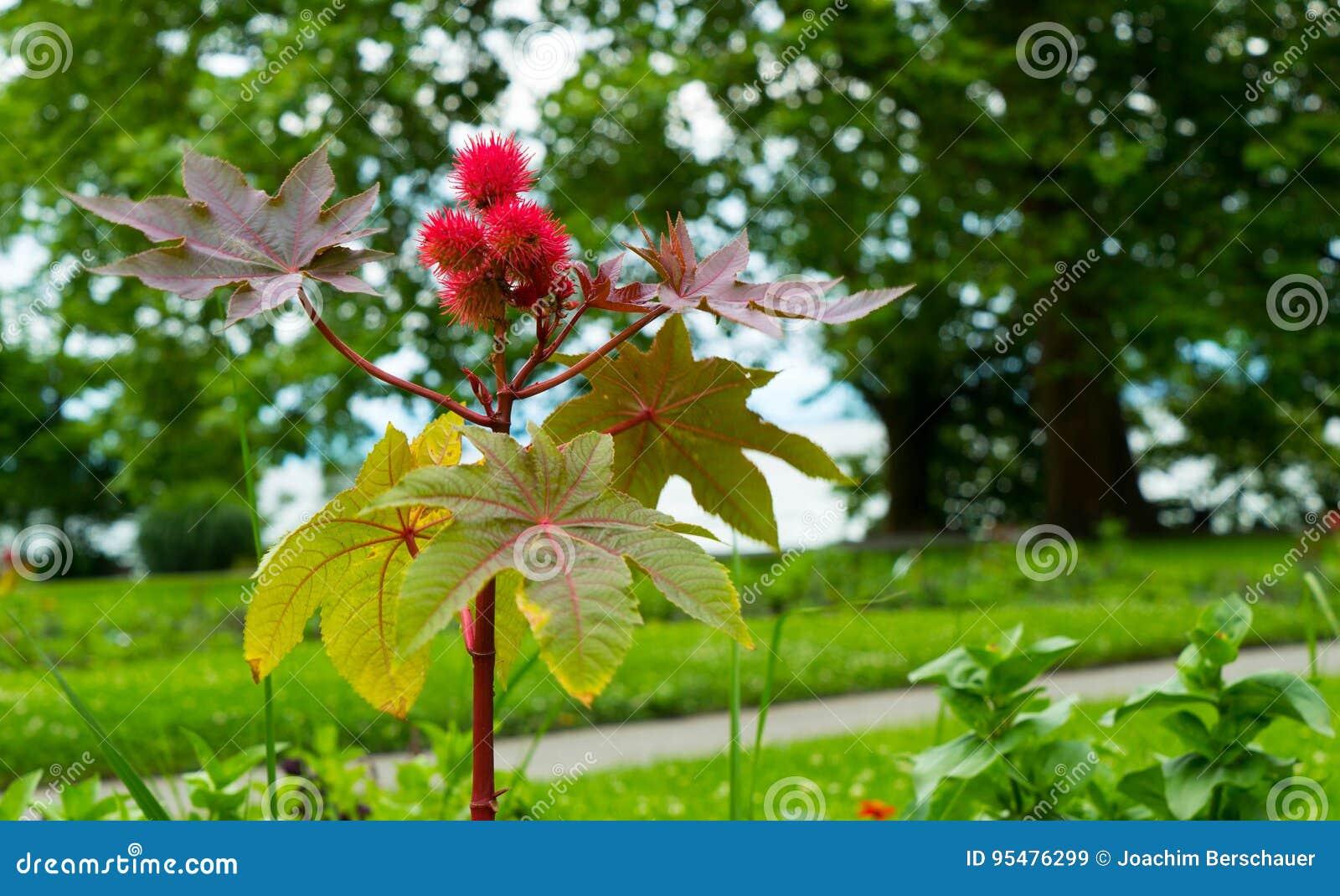 Piękny niezwykły kwiatu zakończenie