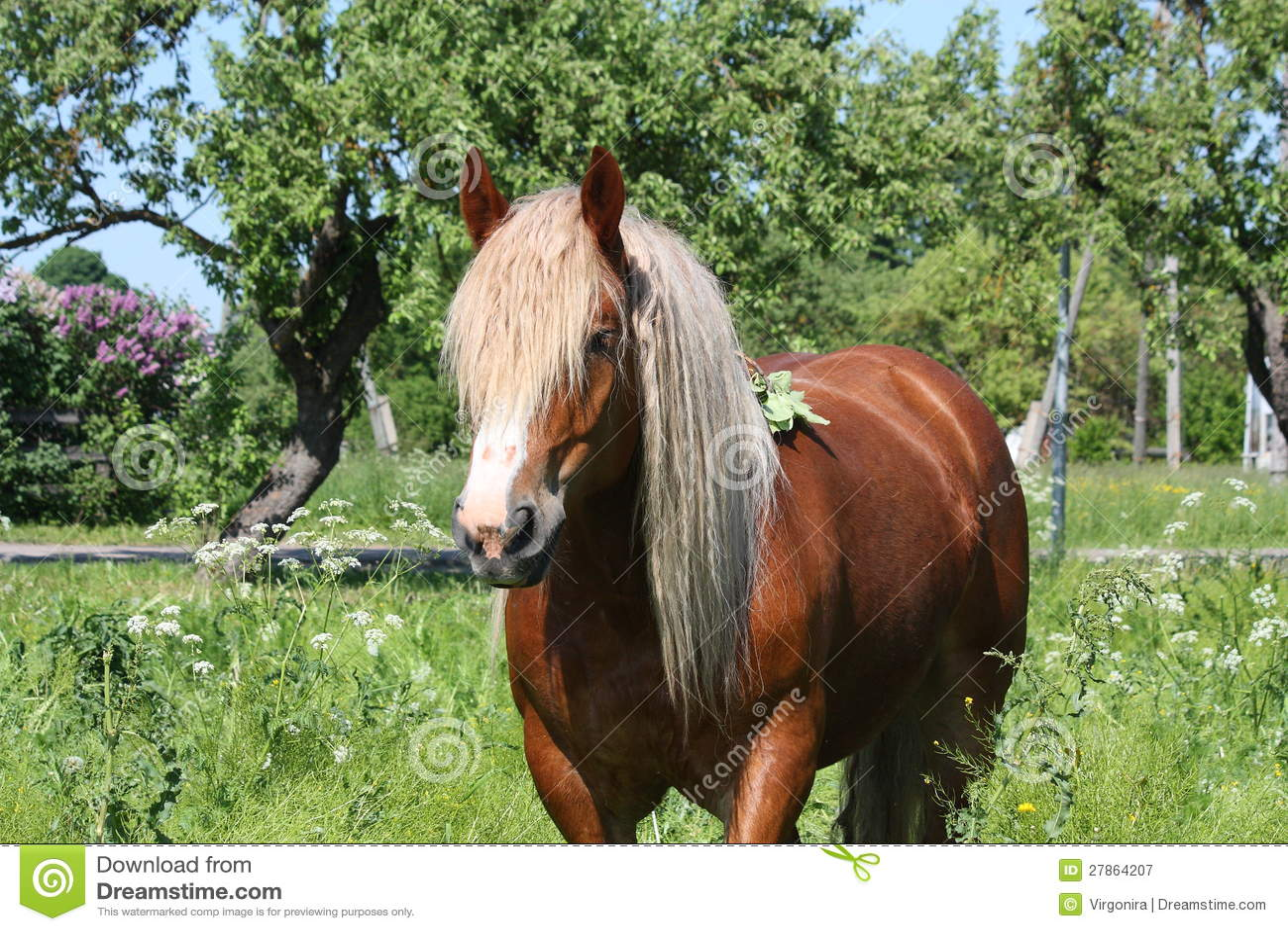 Piękny palomino łyknięcia konia portret