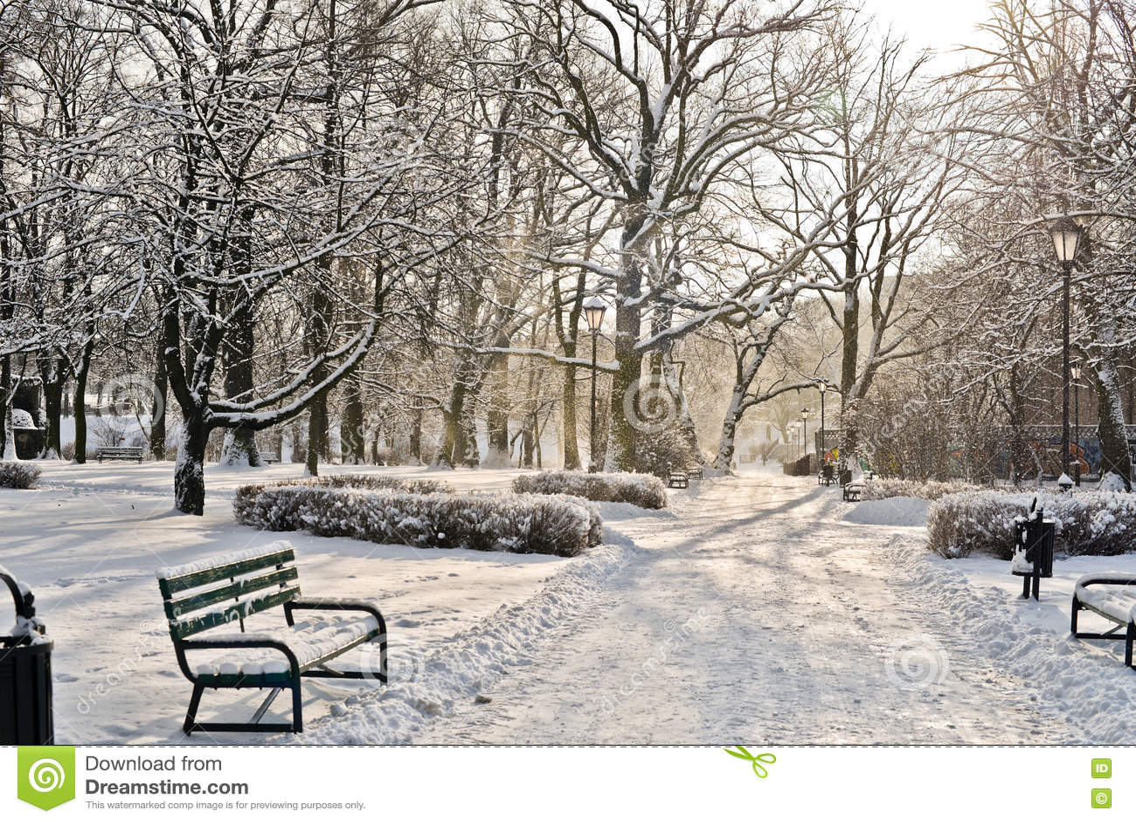 Piękny park w zimie