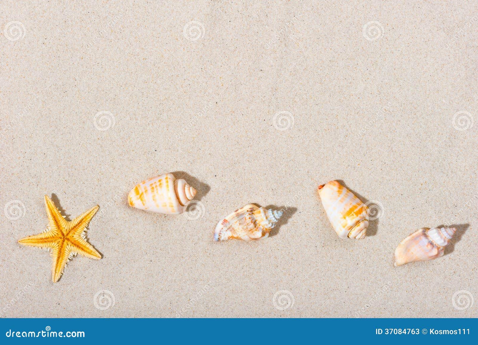 Download Piękny Plażowy Piasek I Denne Istoty Obraz Stock - Obraz złożonej z niezrównoważenie, szczegółowy: 37084763