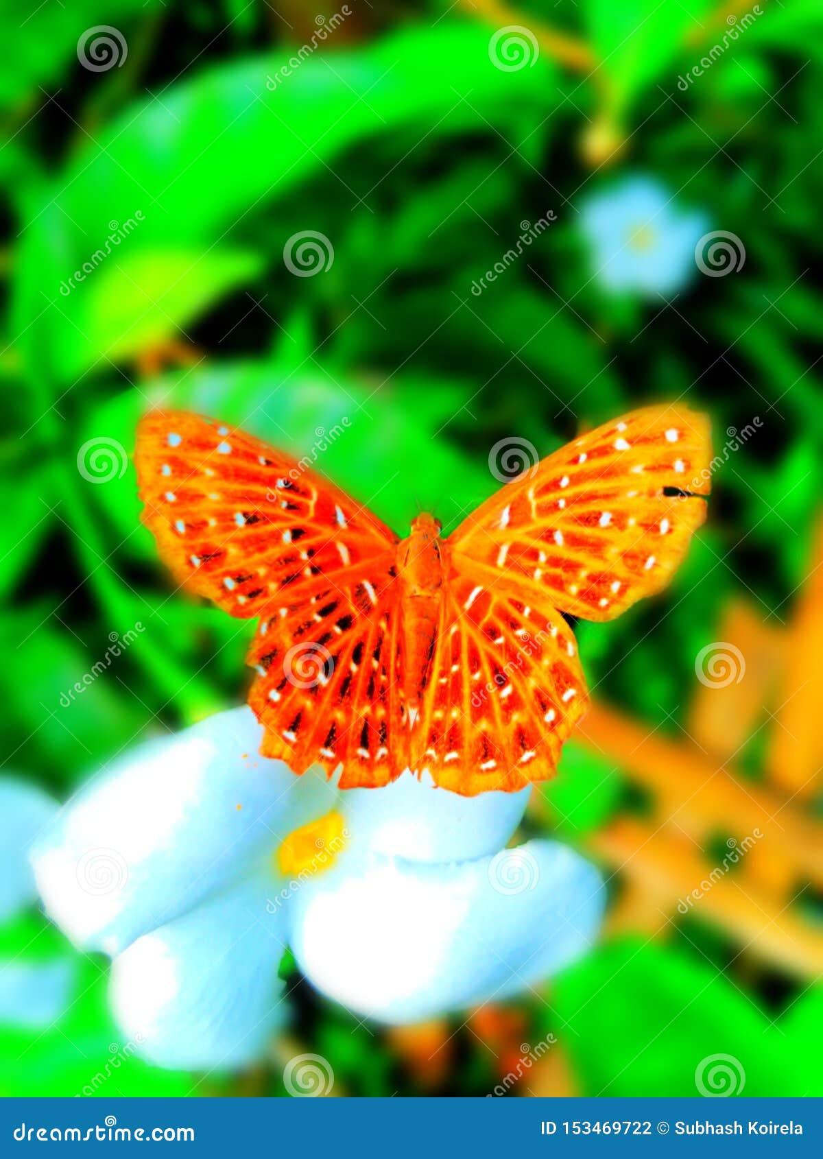 Piękny plamy tła motyla wizerunek