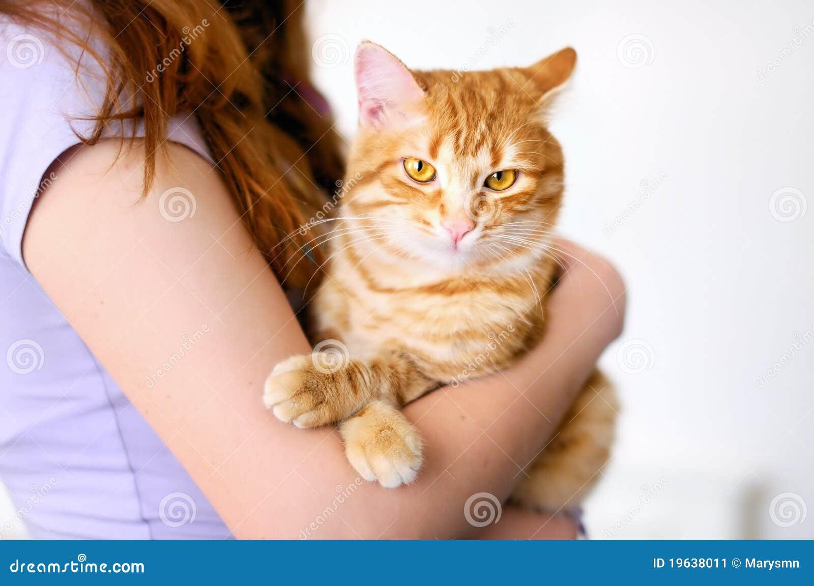 Piękny pomarańczowy tomcat