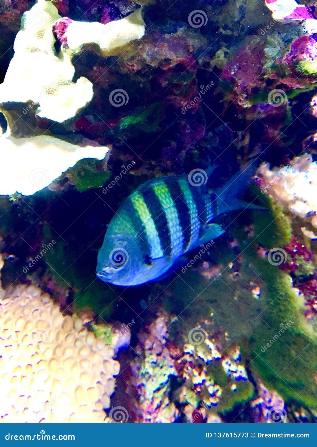 Piękny rybi dopłynięcie w akwarium