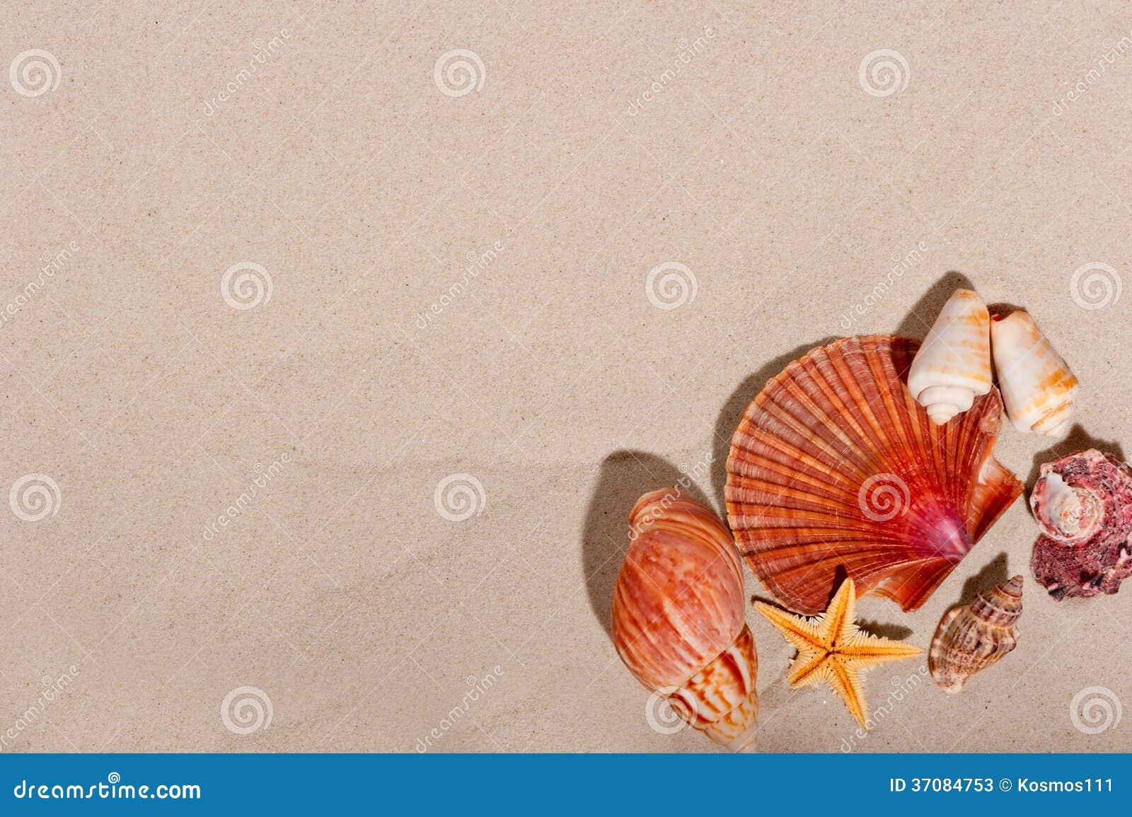 Download Piękny Tło Z Morskimi Zagadnieniami Obraz Stock - Obraz złożonej z koral, idylliczny: 37084753