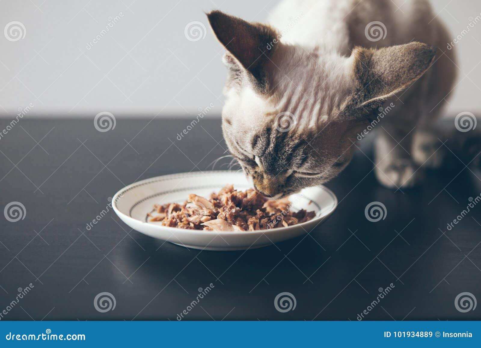 Piękny tabby kota obsiadanie obok karmowego talerza