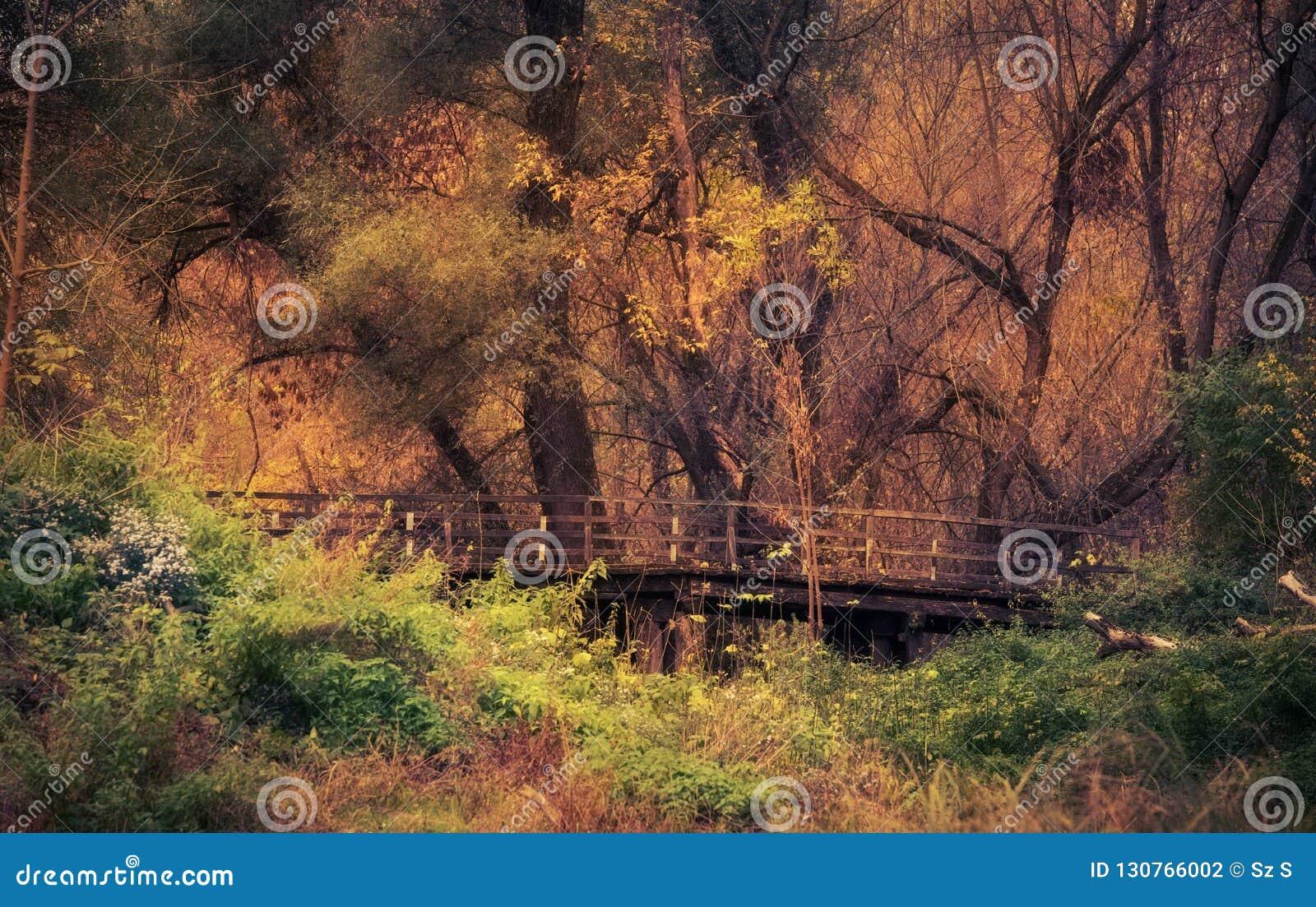 Piękny złoty las jesień dzień