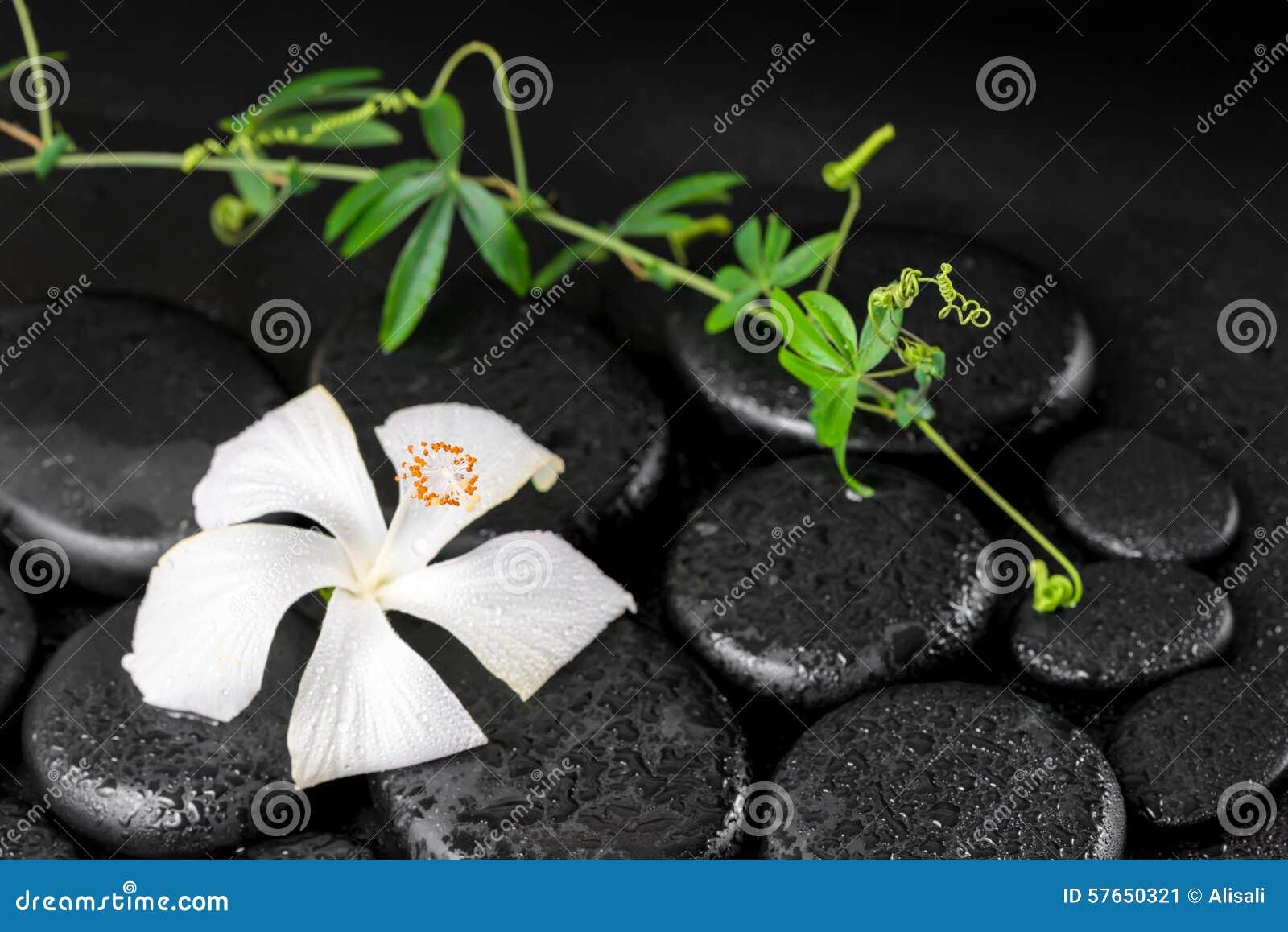Piękny zdroju pojęcie kwitnąć delikatnego białego poślubnika, zieleń
