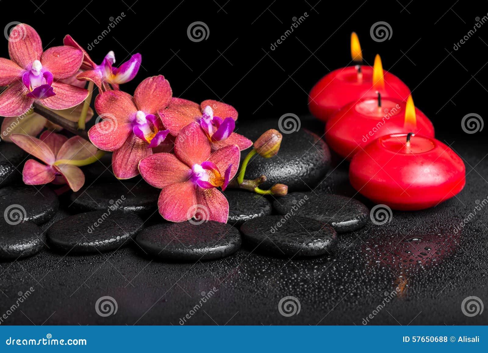 Piękny zdroju wciąż życie kwitnienie gałązki czerwony storczykowy kwiat, pha