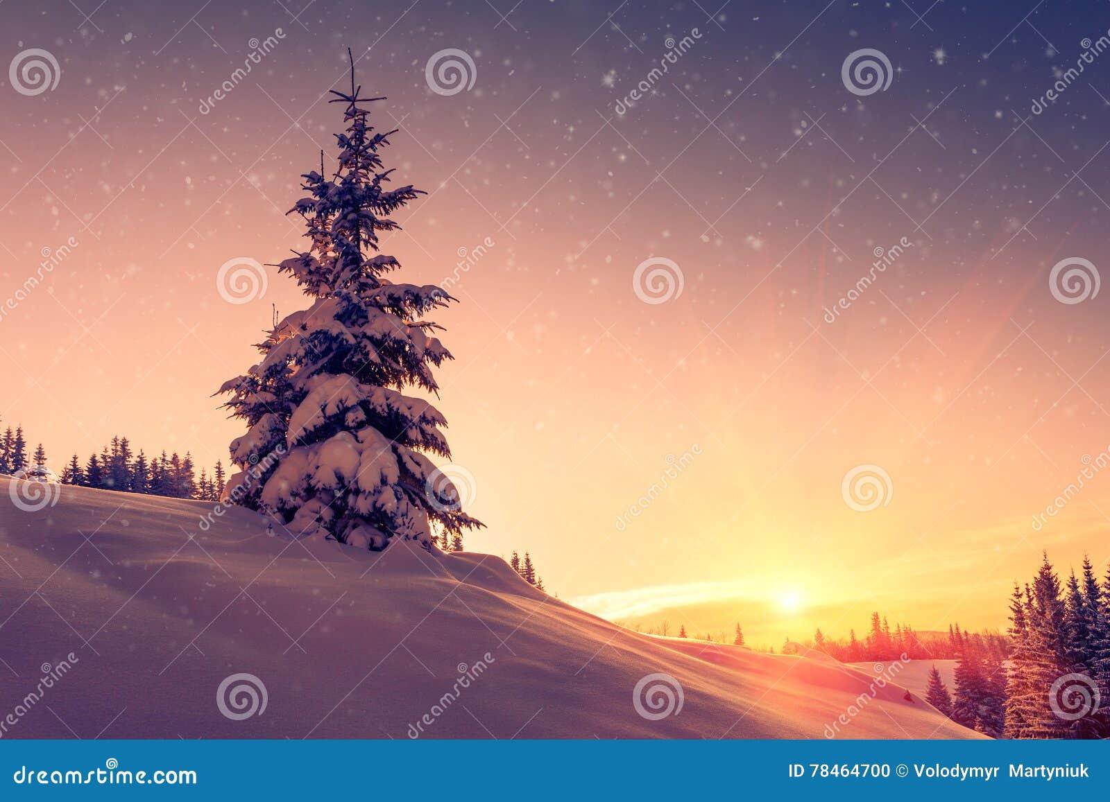 Piękny zima krajobraz w górach Widok śnieżyści conifer drzewa, płatki śniegu przy wschodem słońca i Wesoło boże narodzenia i szcz