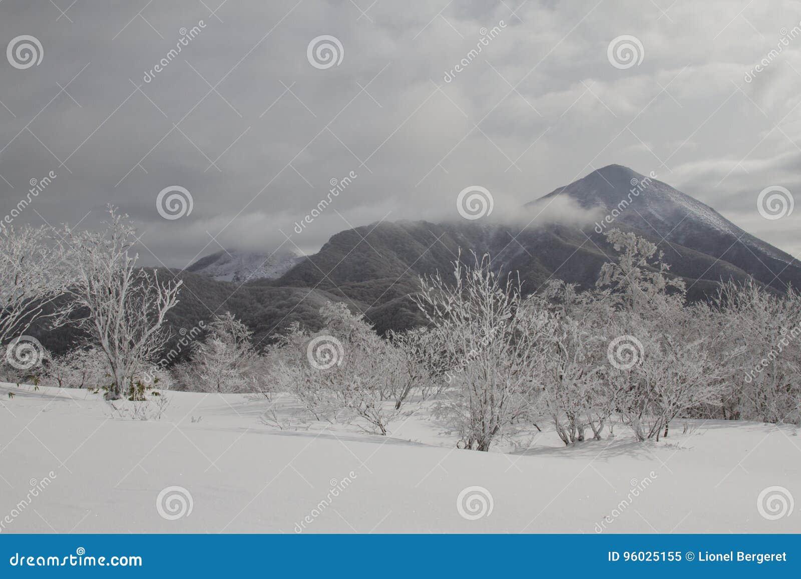 Piękny zima krajobraz z śniegi zakrywającymi drzewami