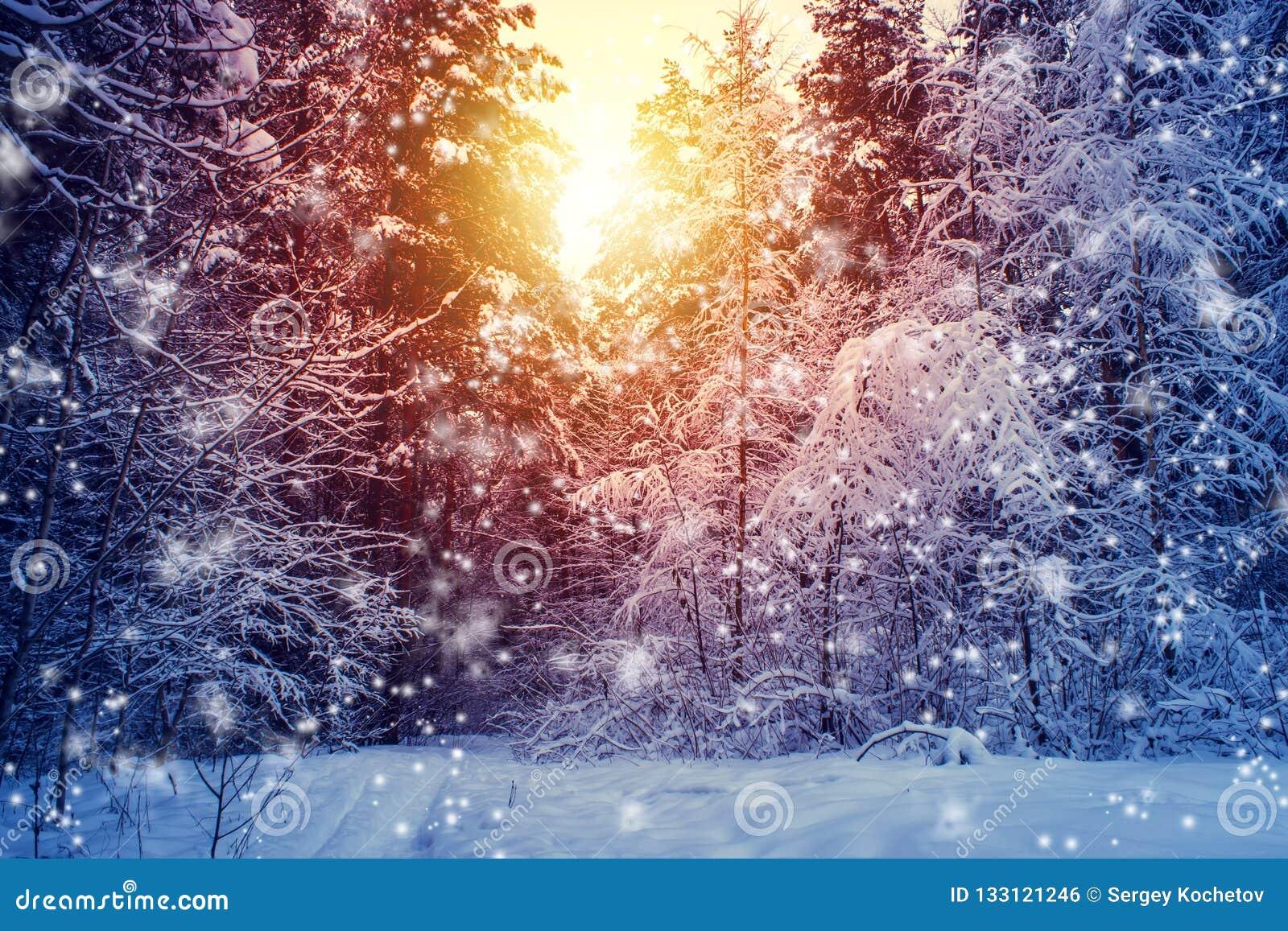 Piękny zima krajobraz z lasem, drzewami i wschodem słońca, winterly ranek nowy dzień Boże Narodzenia kształtują teren z śniegiem