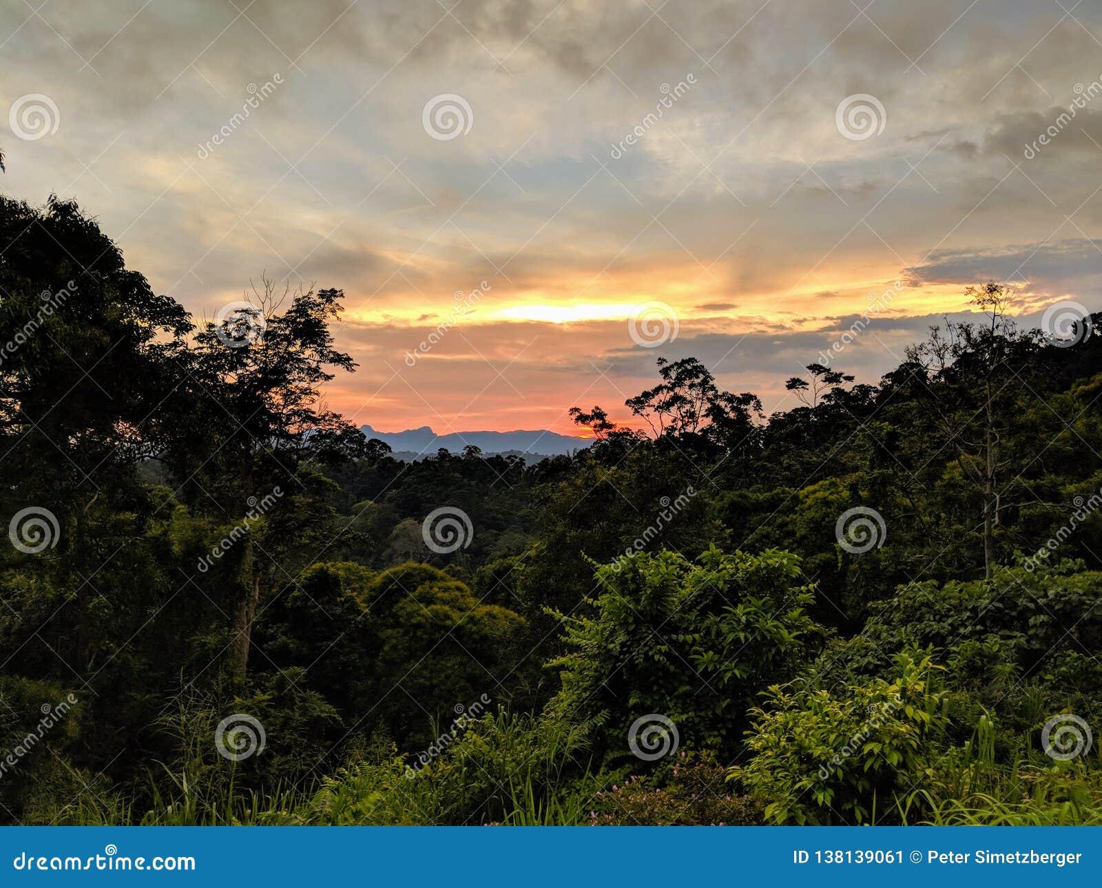 Piękny zmierzch nad ciemną dżunglą