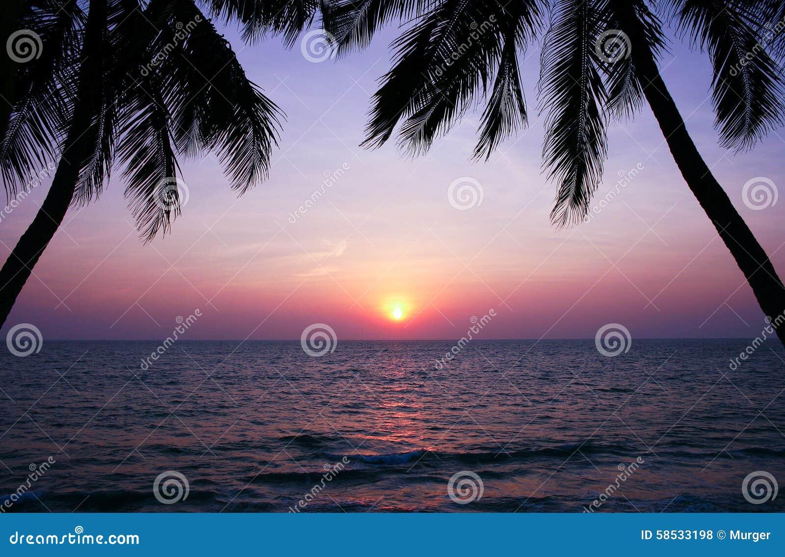 Piękny zmierzch nad drzewko palmowe sylwetkami i morzem