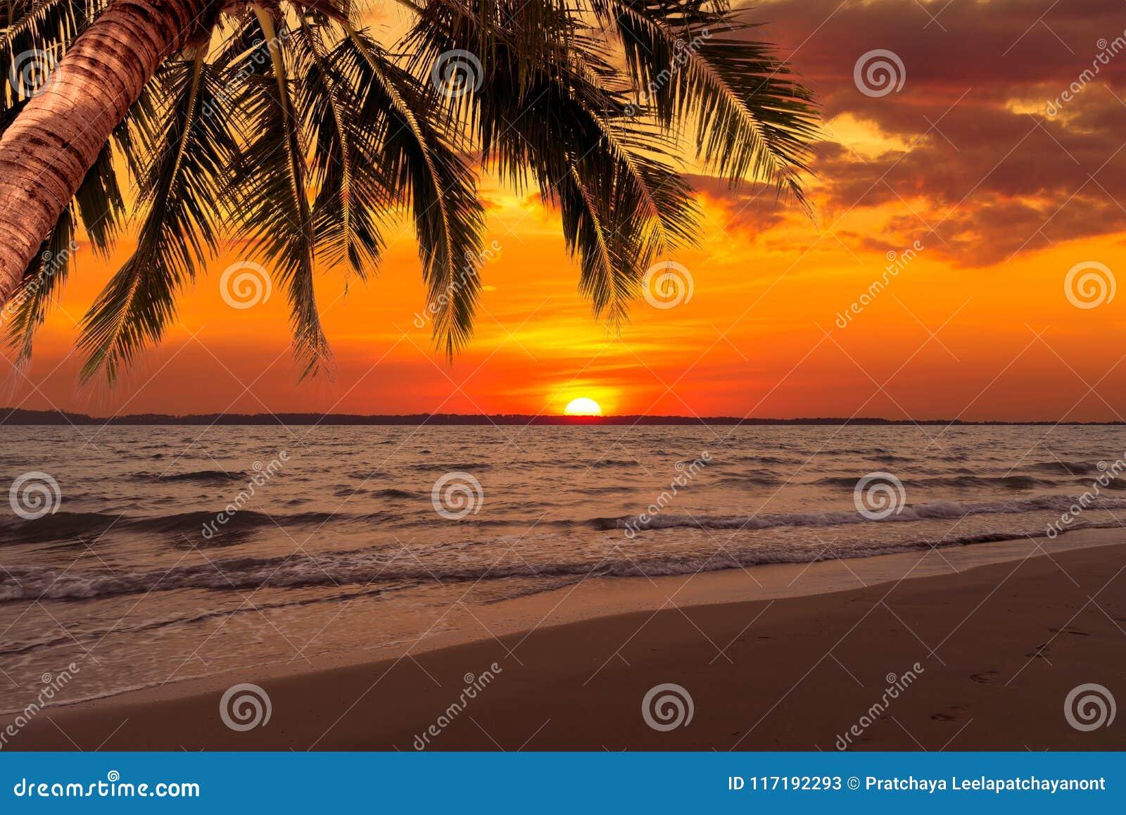 Piękny zmierzch nad morzem z kokosowym drzewem przy latem