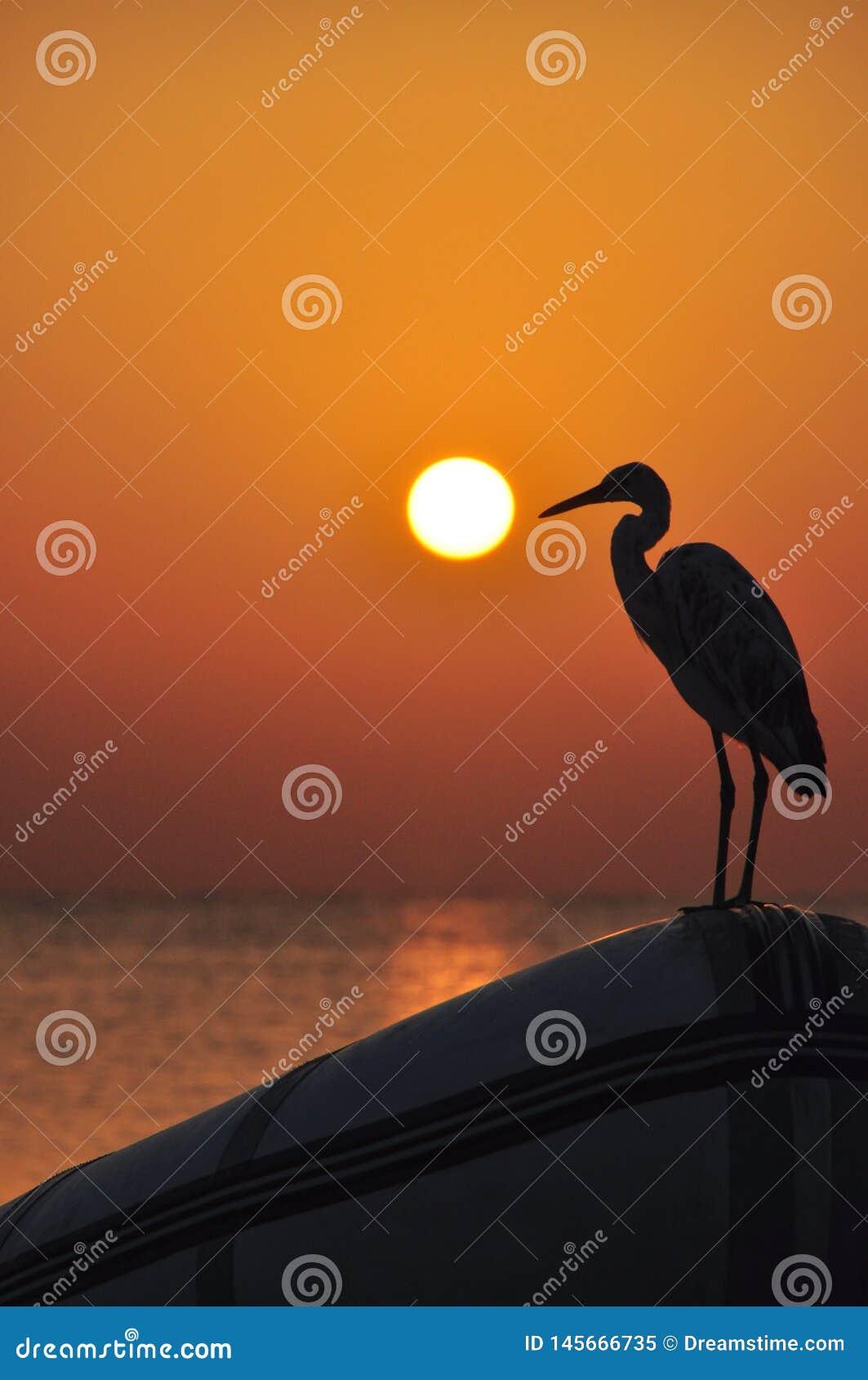 Piękny zmierzch nad morzem z odbiciami czerwoni i żółci promienie na morza nawierzchniowy bawić się na plażowych falach z ptakiem