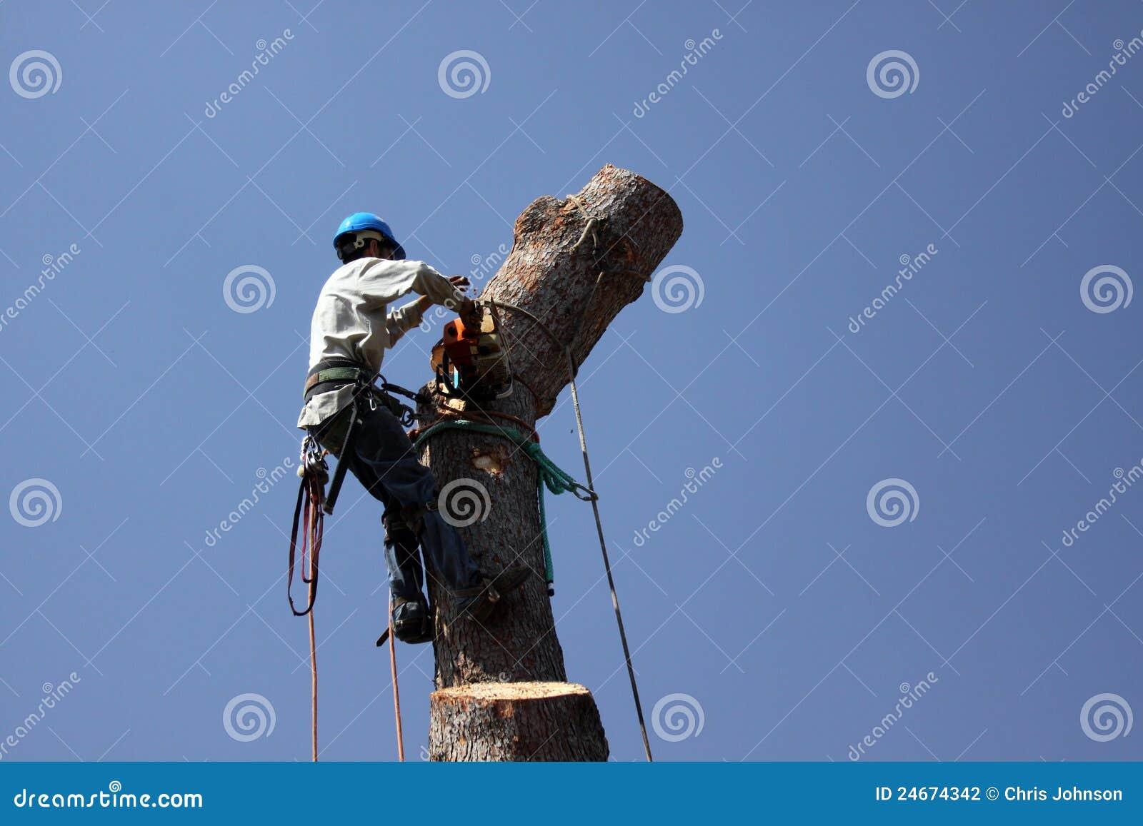 Piła łańcuchowa spotyka drzewa
