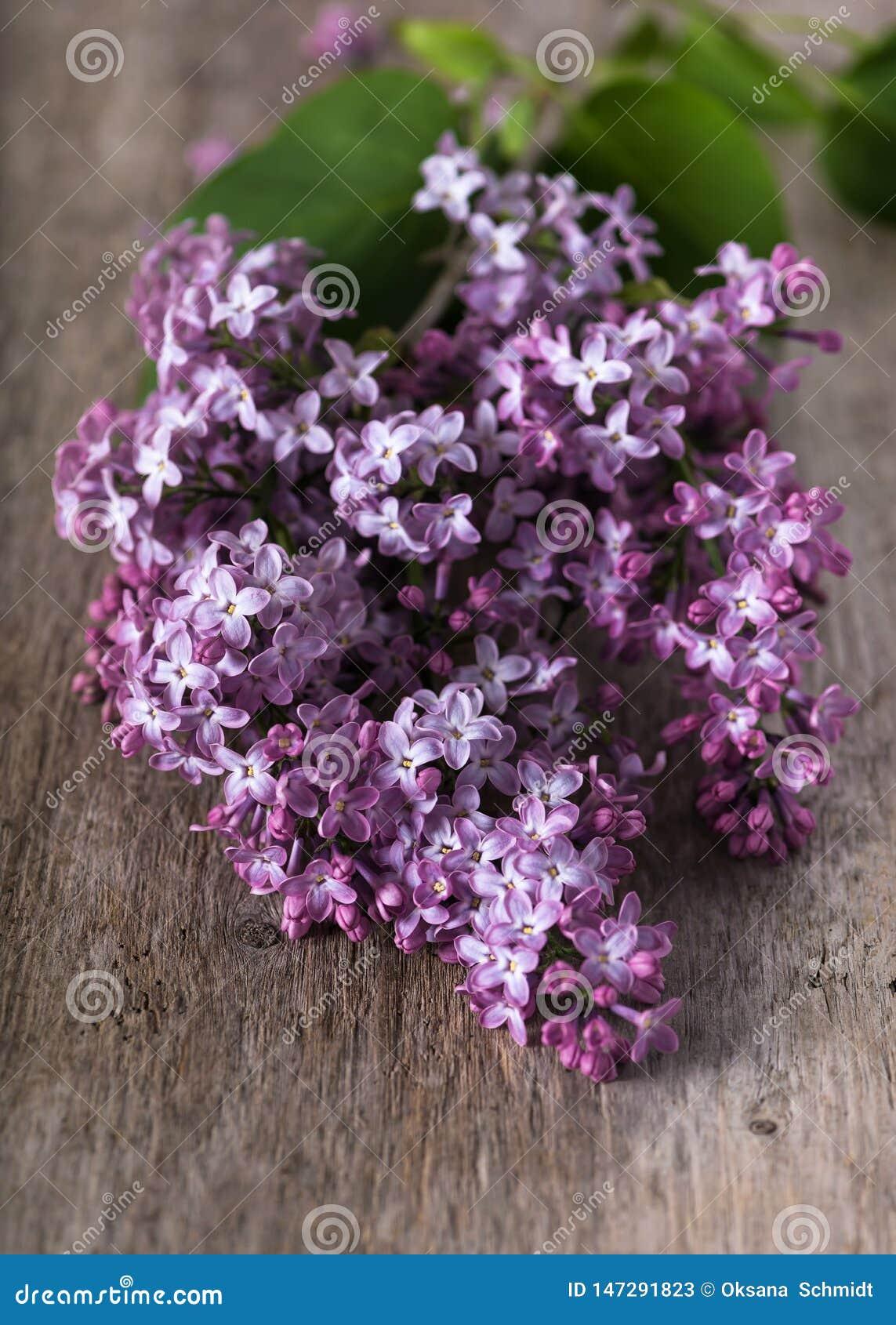 Pi?kni ?wiezi purpurowi fio?kowi bz?w kwiaty
