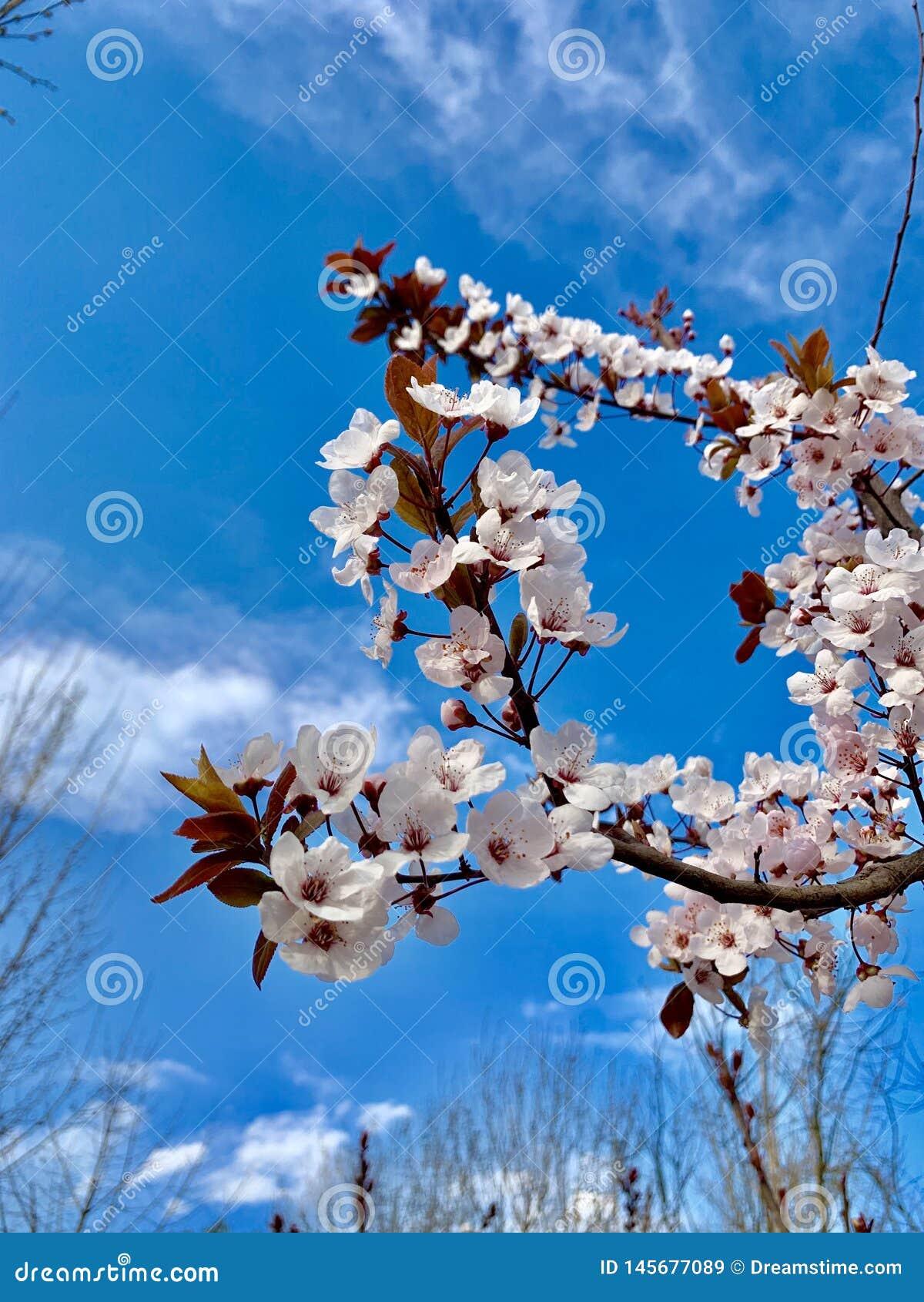 Pi?kny kwiat i niebieskie niebo