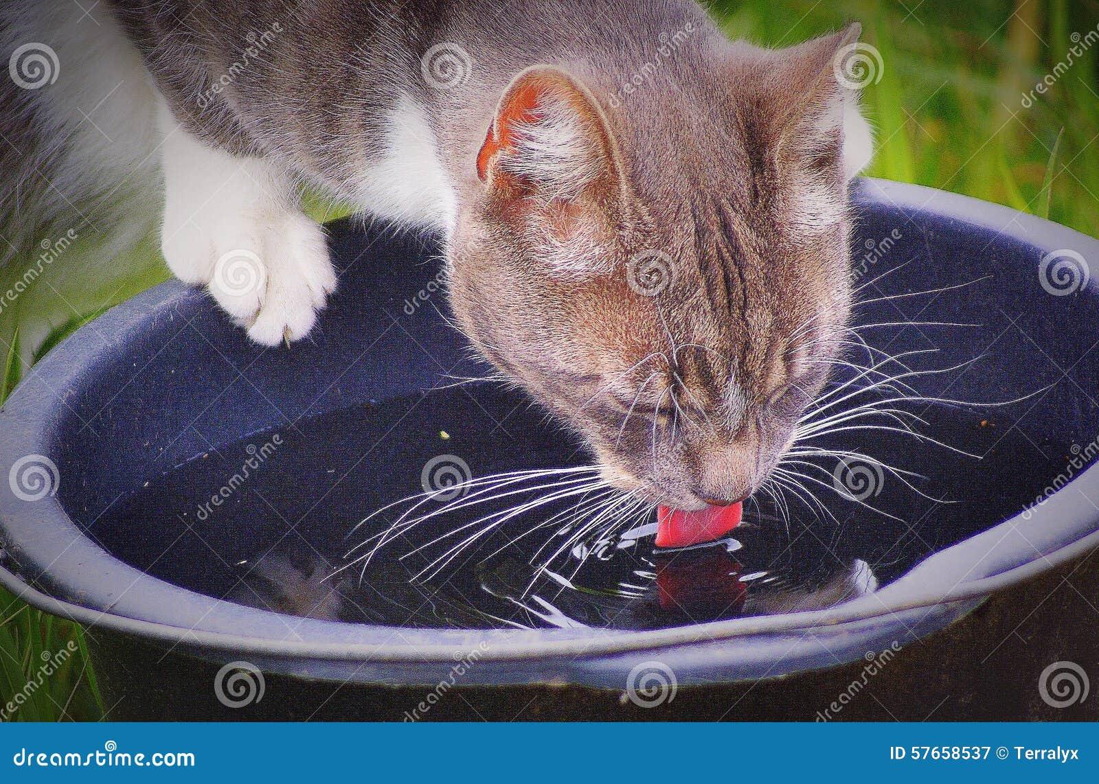 Pić kota