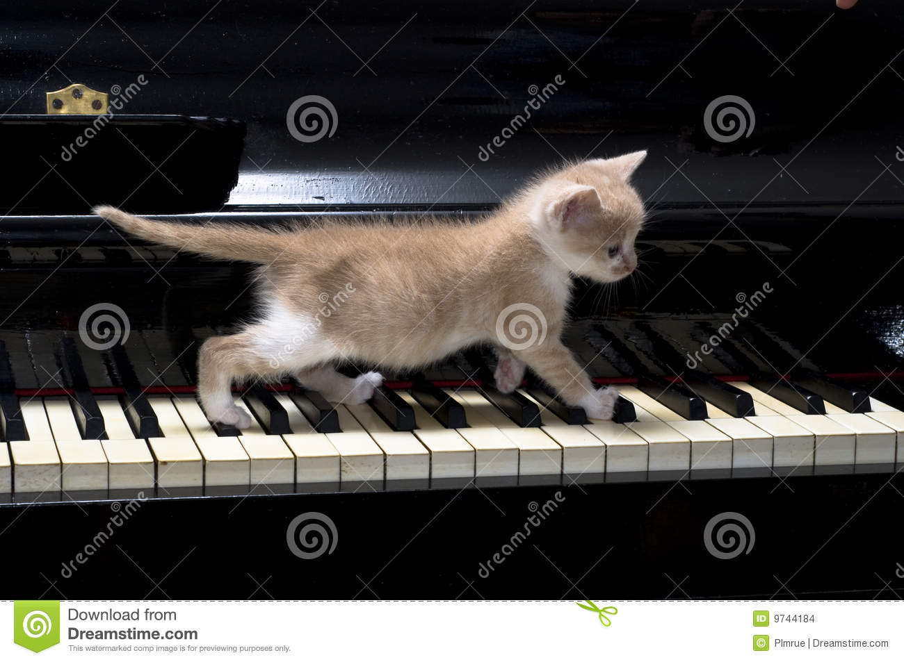 piano cat stock images image 9744184 Black and White Frog Vector Frog Silhouette