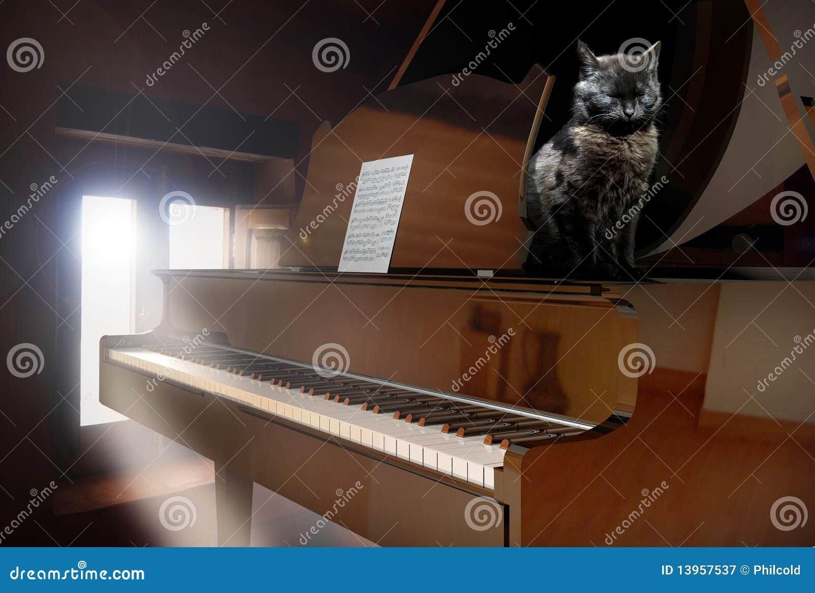 Piano e gatto
